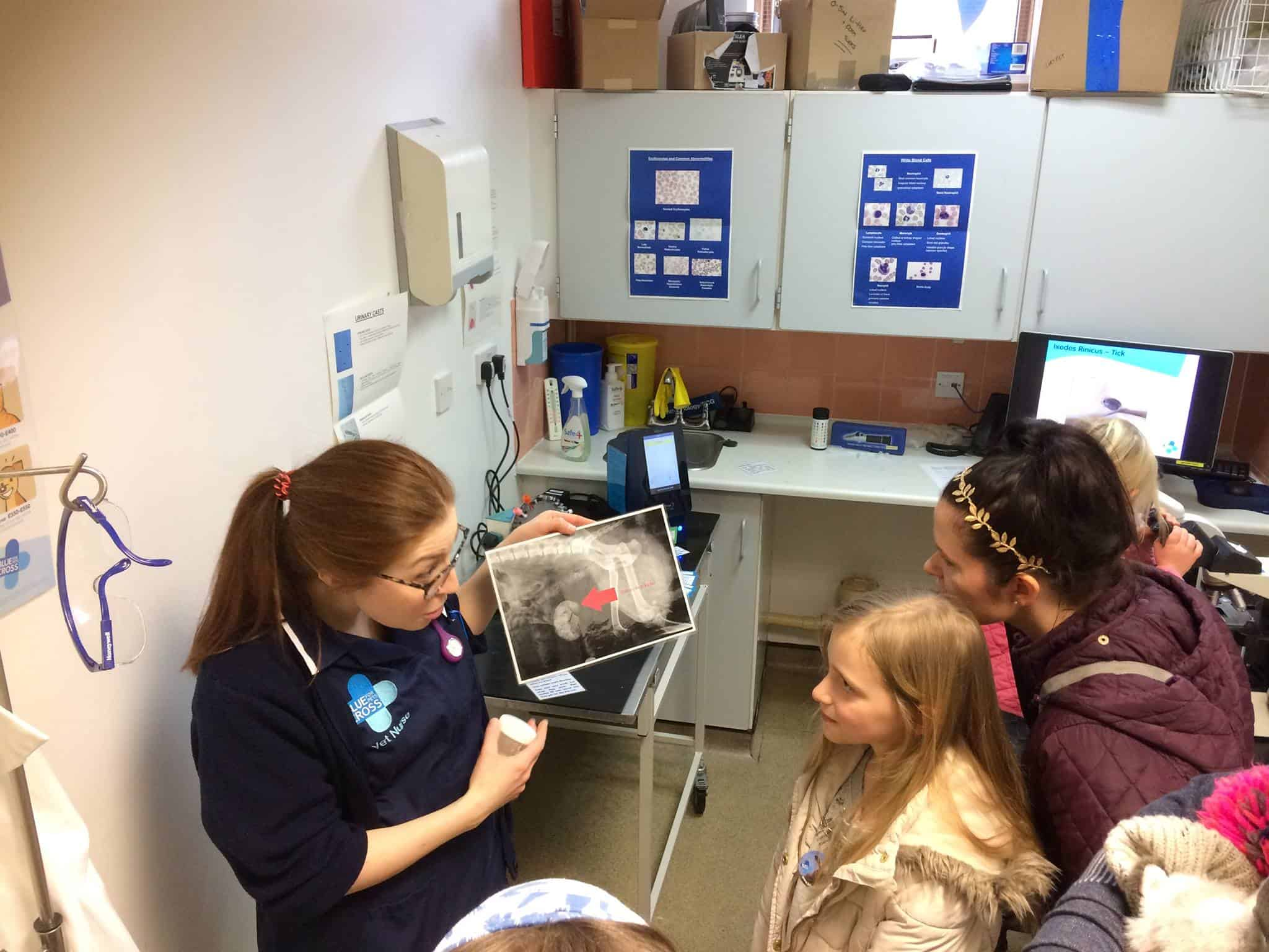 Merton Blue Cross Animal Hospital Open Day