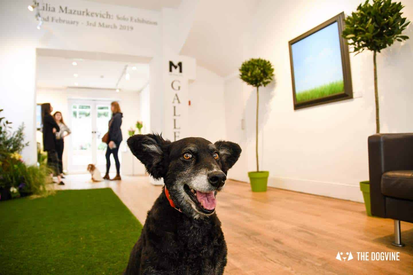 The Dogvine Guide to Dog-friendly Greenwich 10