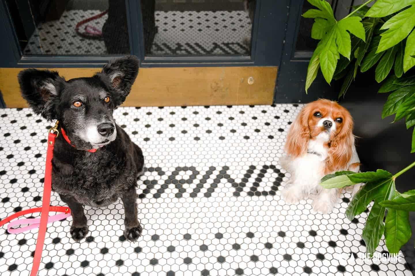 The Dogvine Guide to Dog-friendly Greenwich 12
