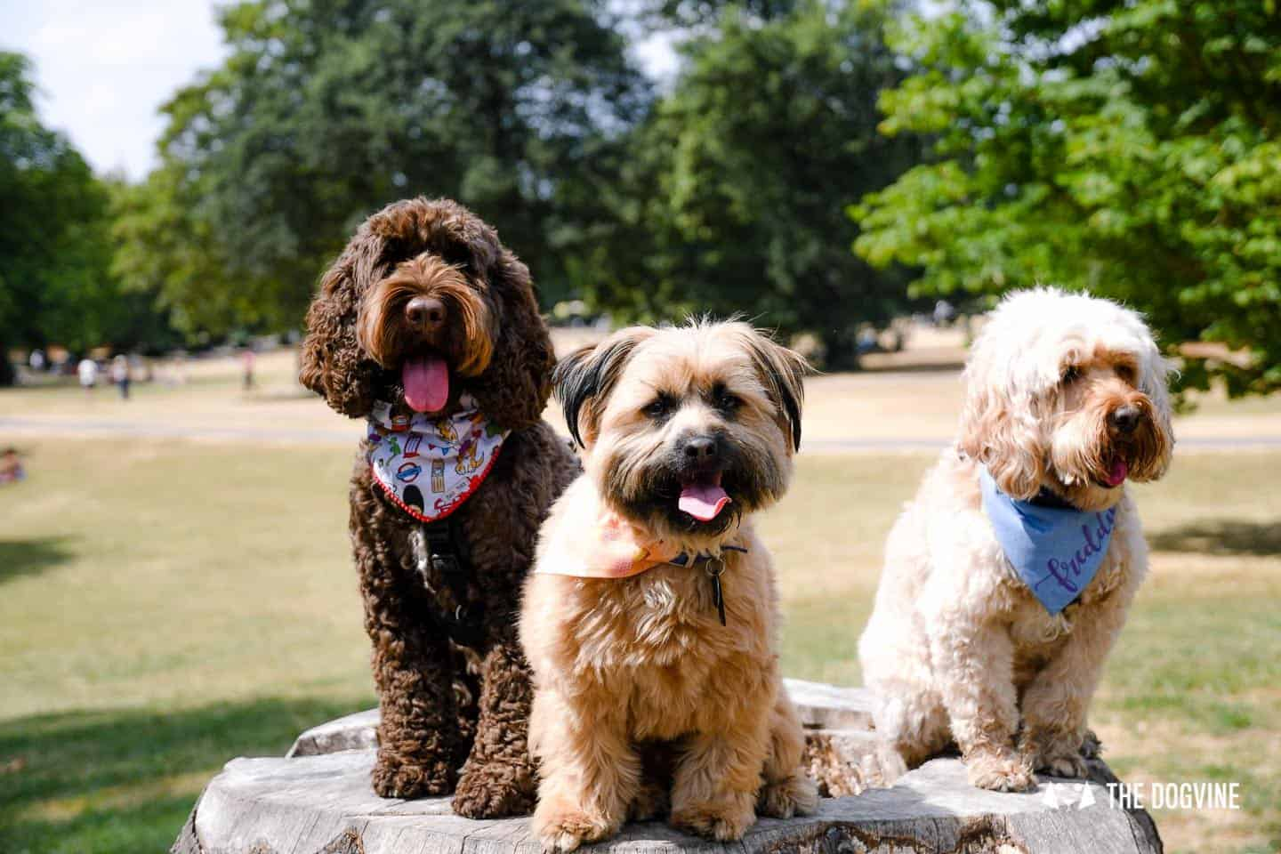 The Dogvine Guide to Dog-friendly Greenwich 14