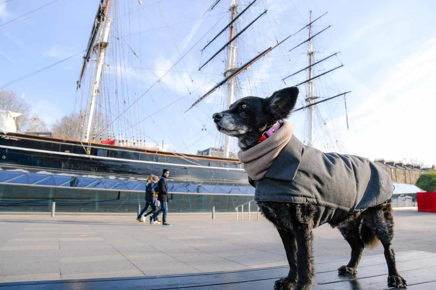 The Dogvine Guide to Dog-friendly Greenwich