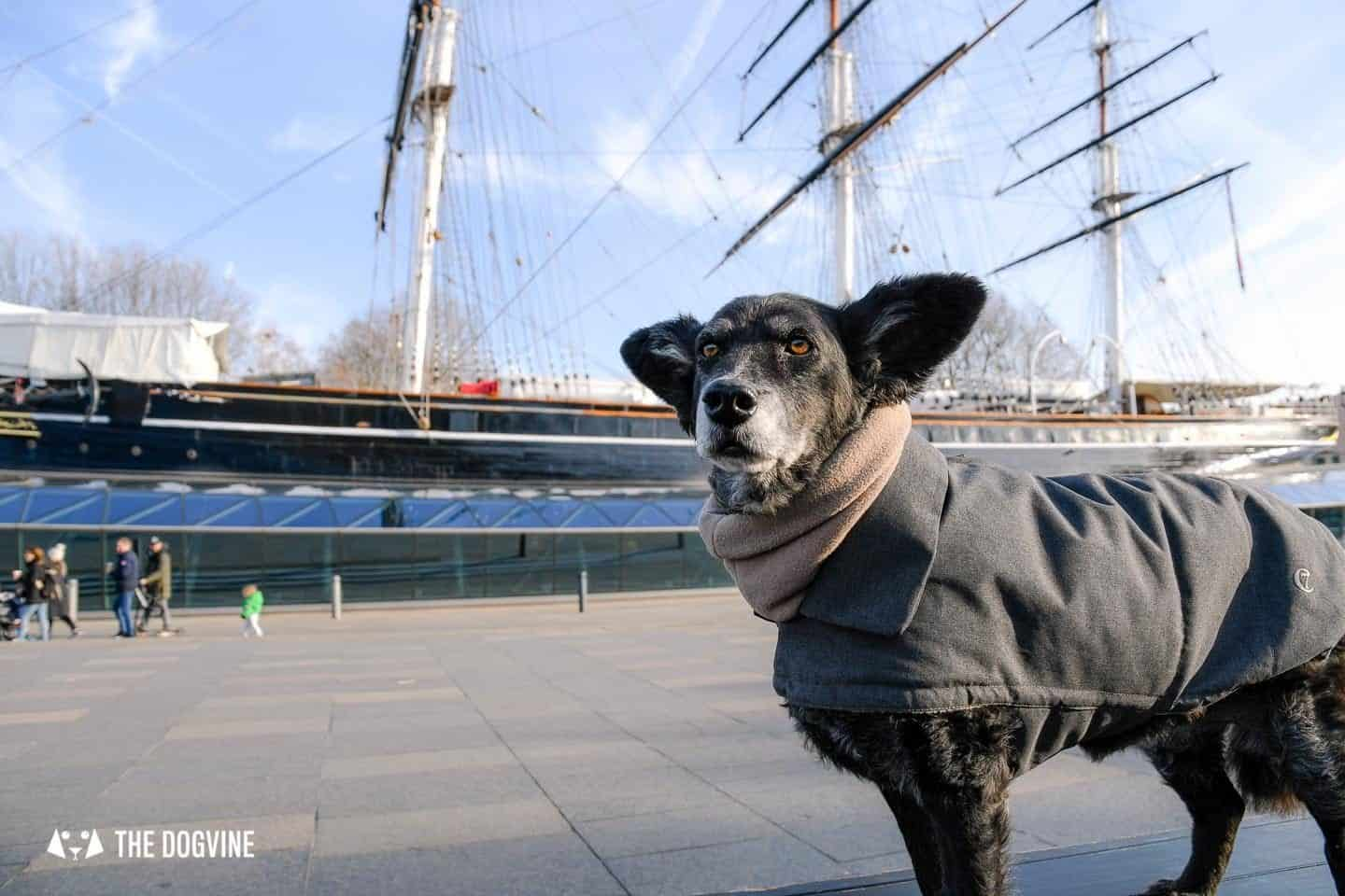 The Dogvine Guide to Dog-friendly Greenwich 15