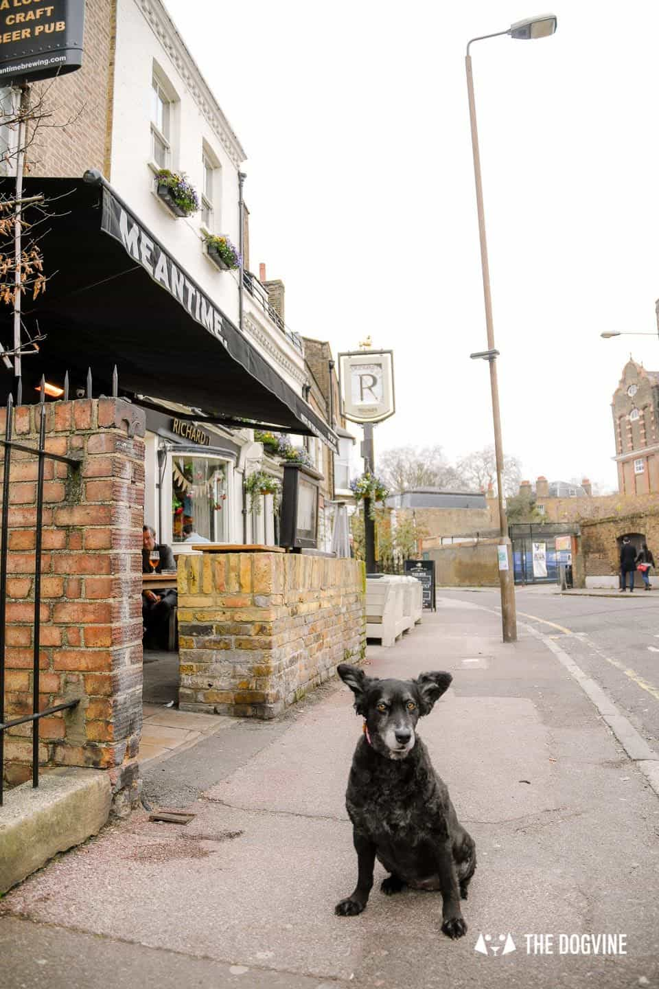 The Dogvine Guide to Dog-friendly Greenwich 3