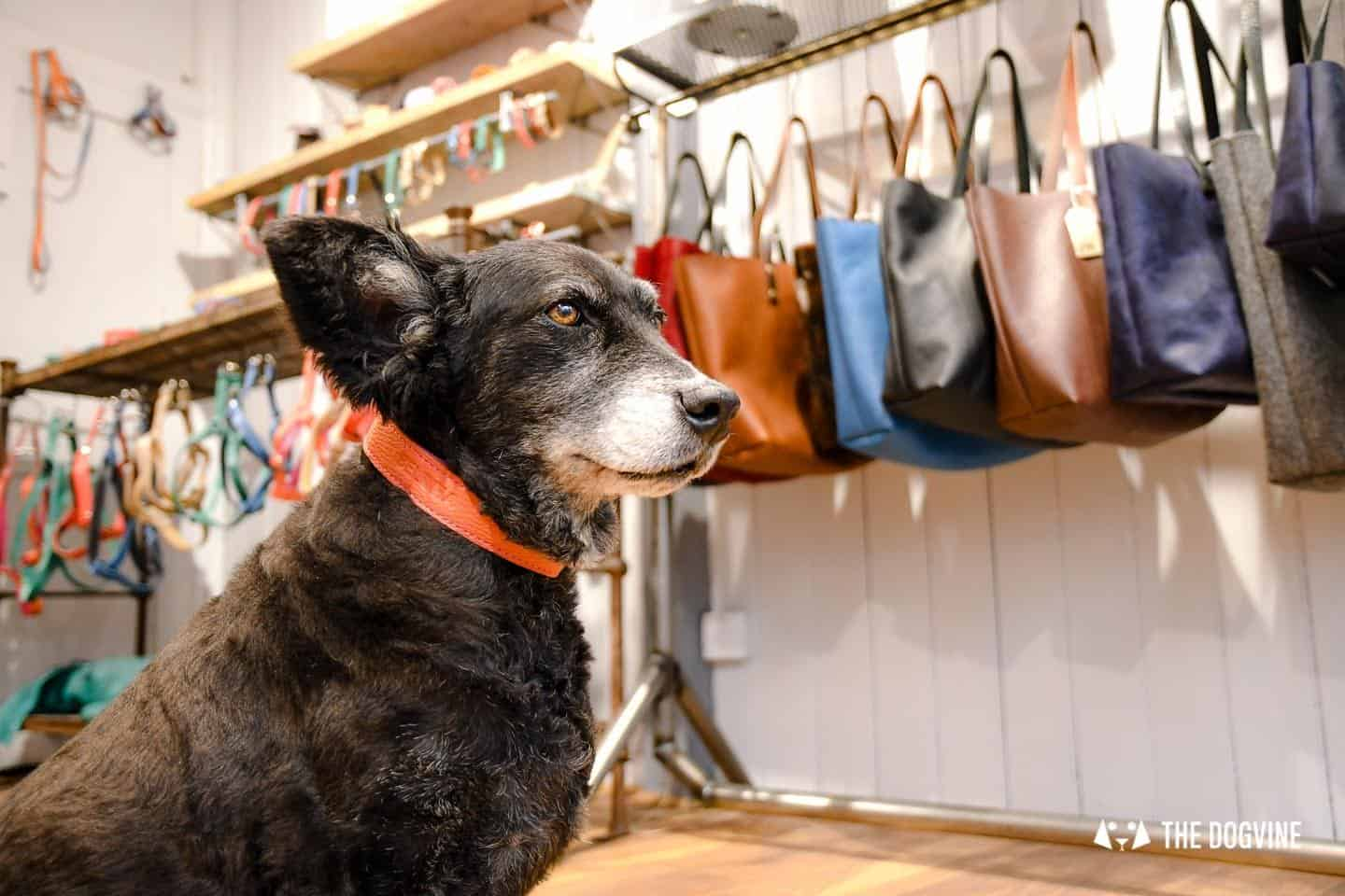 The Dogvine Guide to Dog-friendly Greenwich 4