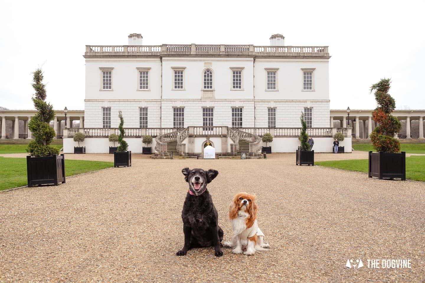 The Dogvine Guide to Dog-friendly Greenwich 7