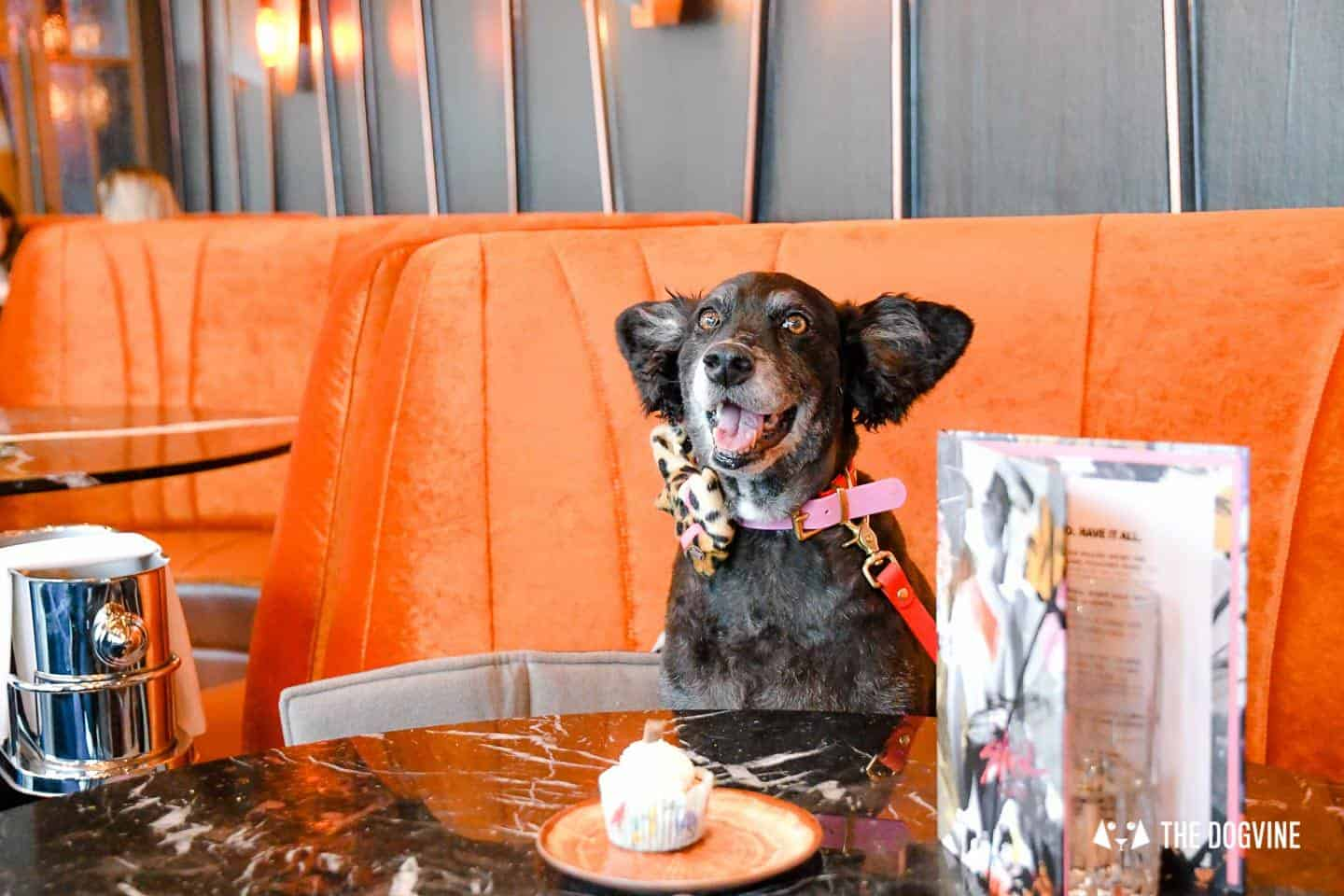 3 Reasons Not To Miss The New Savage Garden Dog Brunch 18