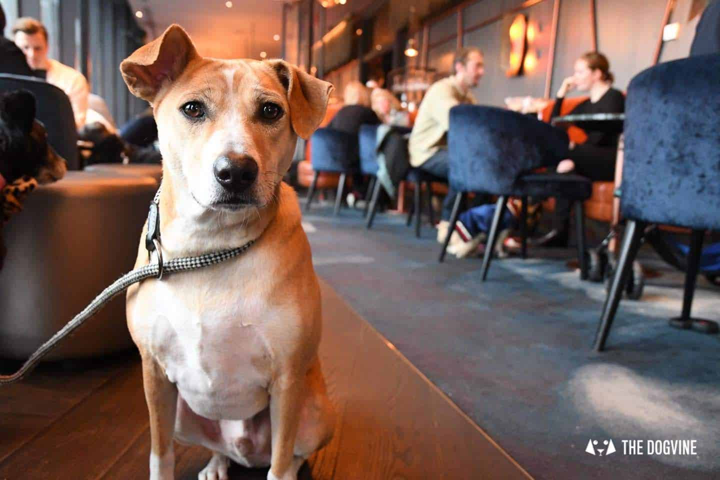 3 Reasons Not To Miss The New Savage Garden Dog Brunch 19