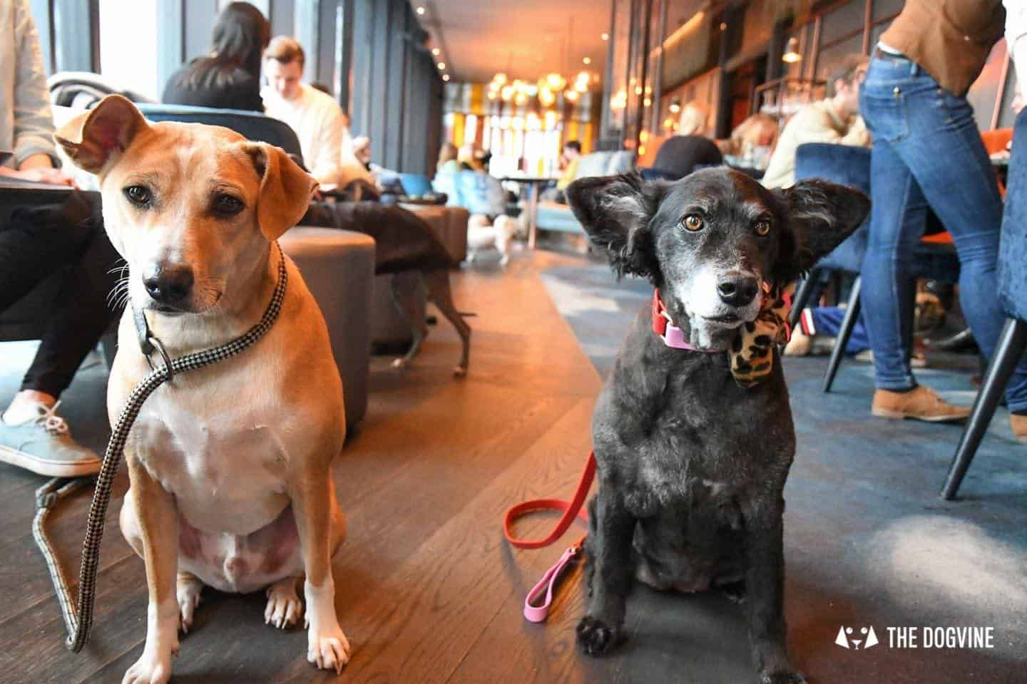 3 Reasons Not To Miss The New Savage Garden Dog Brunch 20