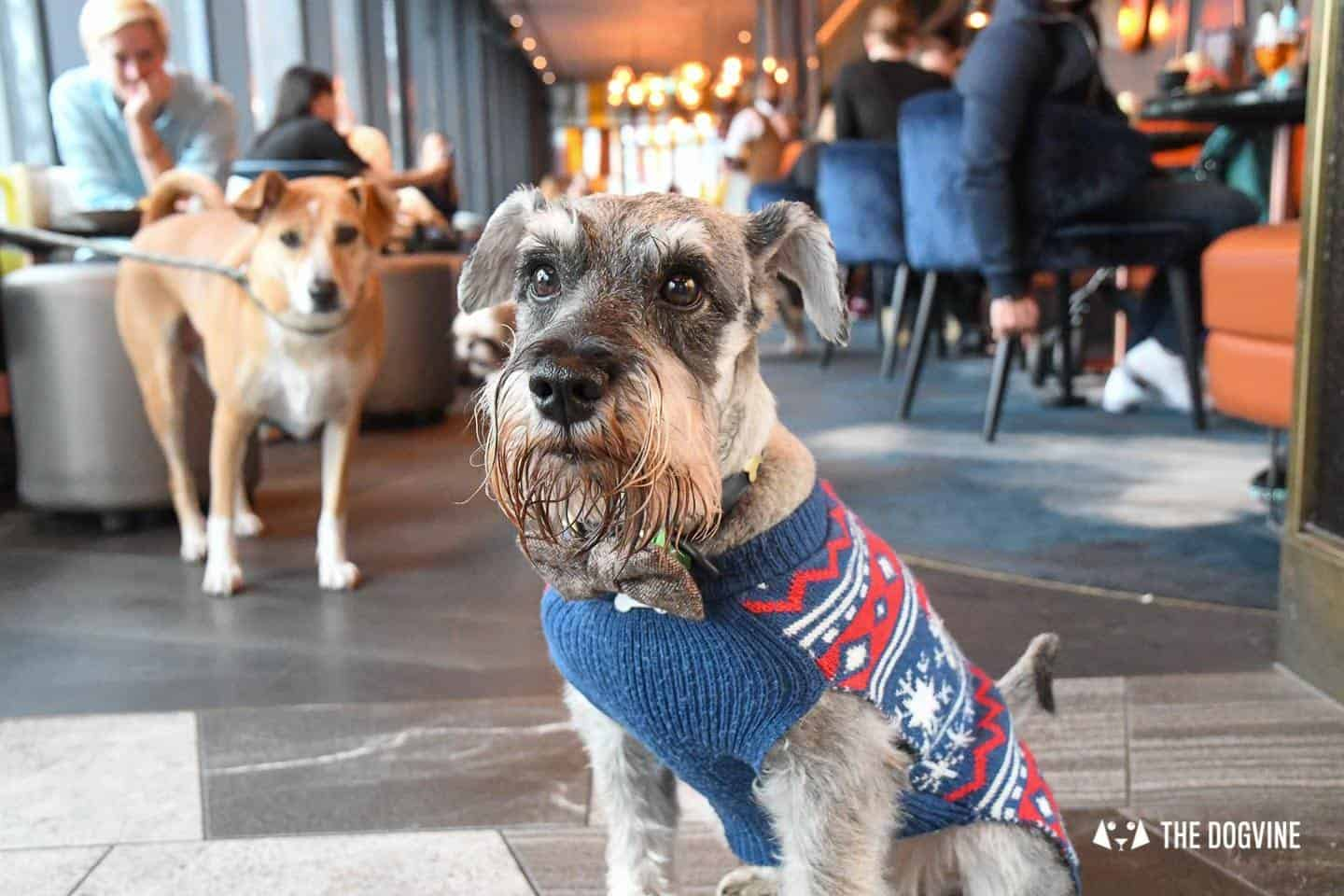 3 Reasons Not To Miss The New Savage Garden Dog Brunch 22
