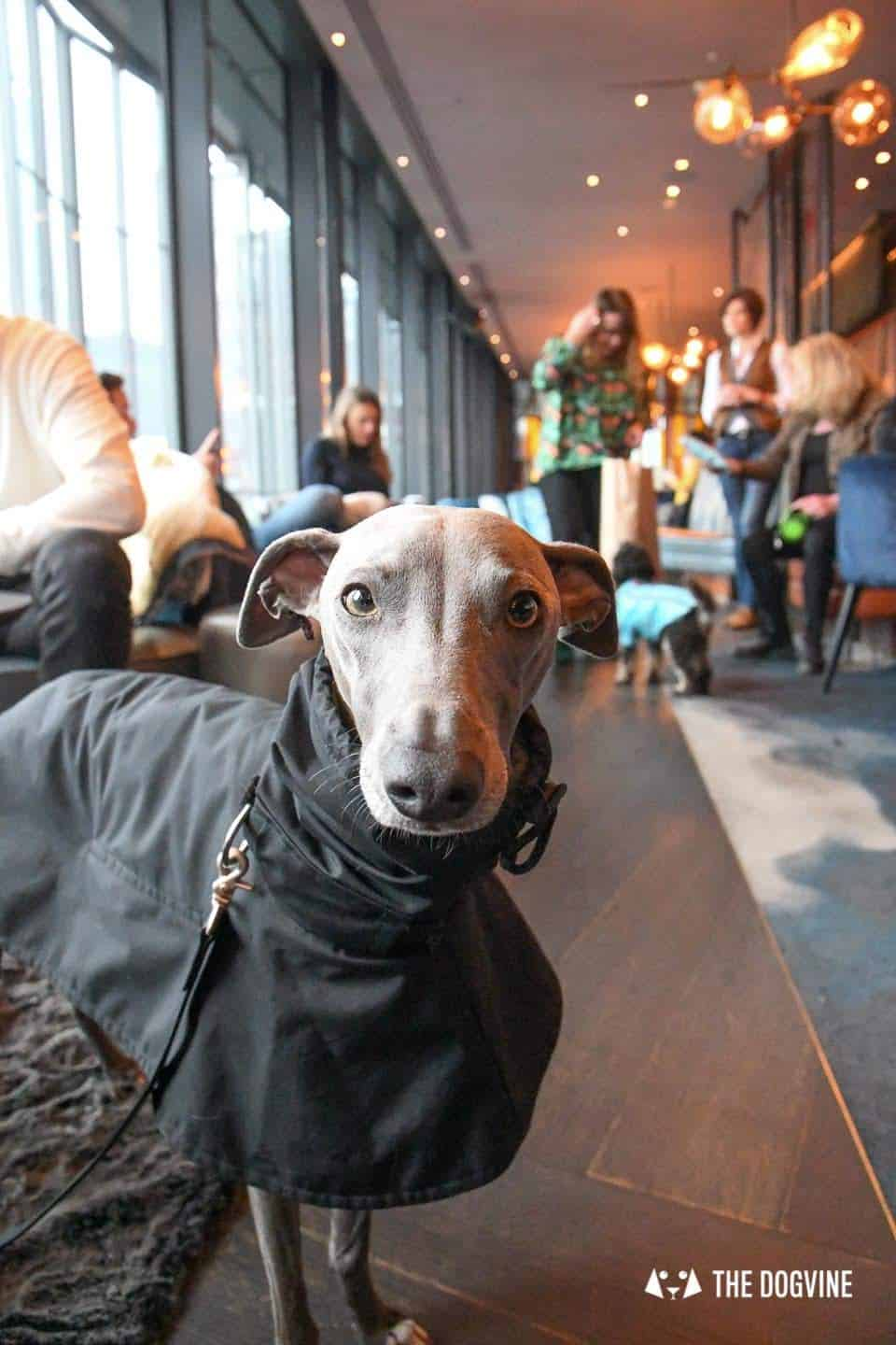 3 Reasons Not To Miss The New Savage Garden Dog Brunch 27