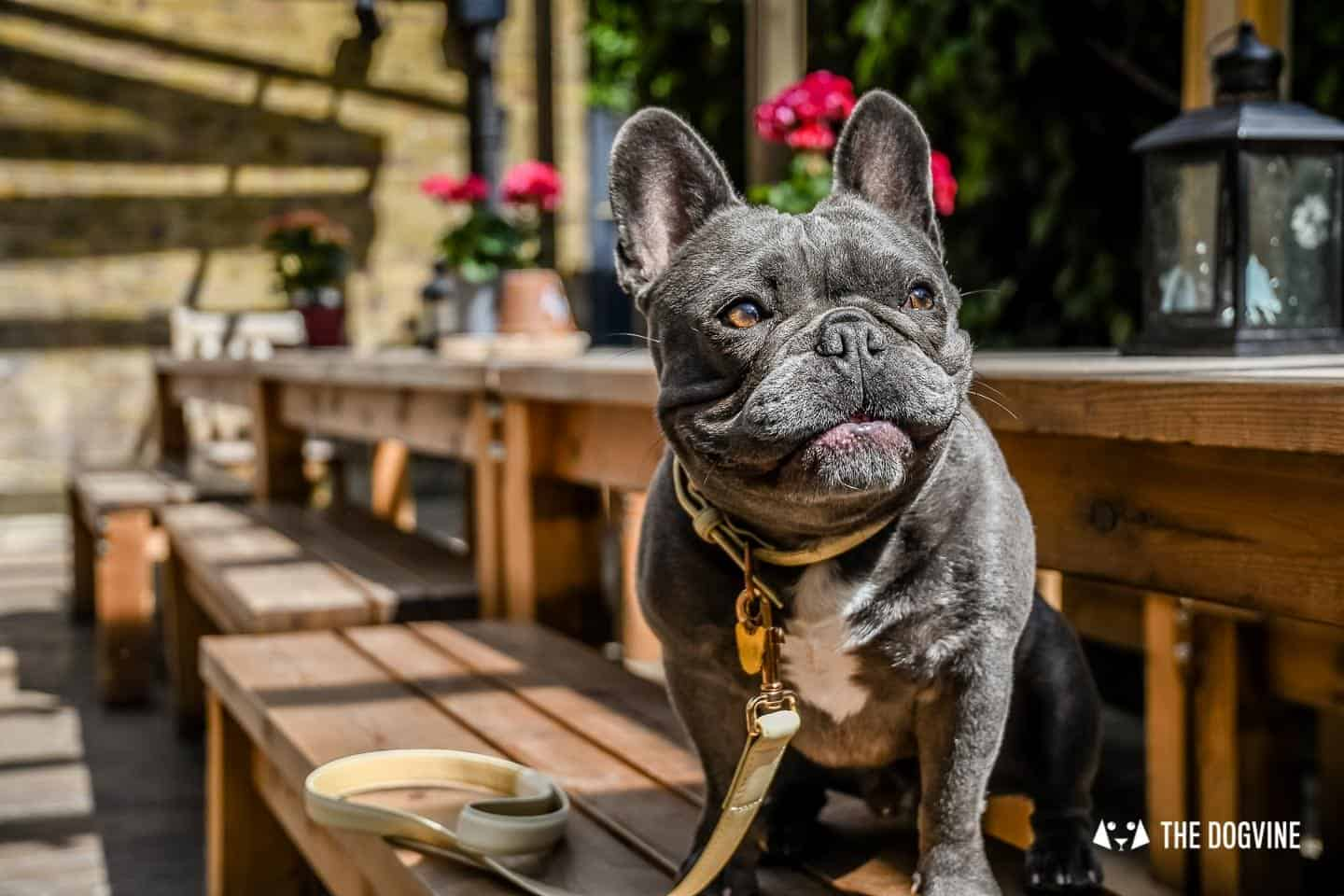 Dog Events In London This Month April 2019 - Herbie