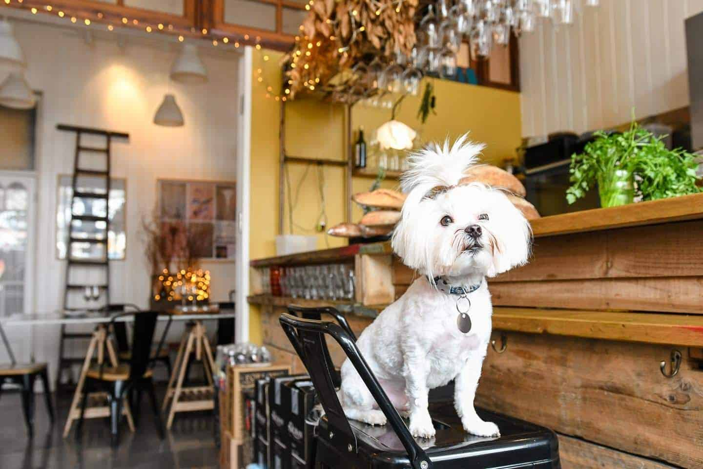 The Best of Dog-friendly St Johns by Milo the Maltese