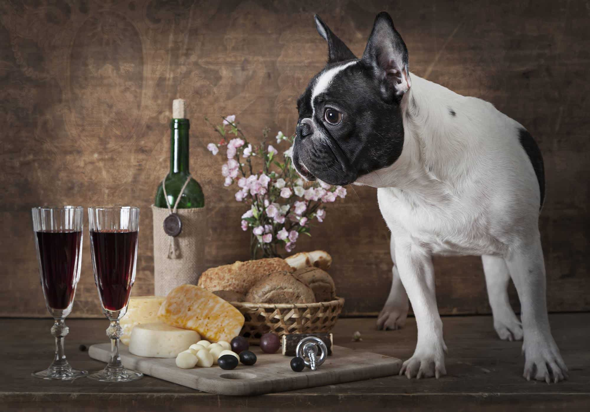 Dog-friendly Wine Tasting | Wine & Canine
