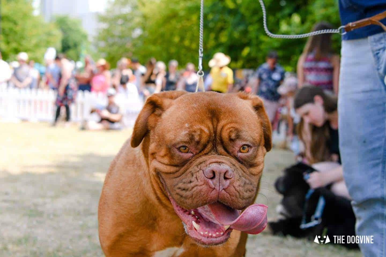 Grove Park Carnival Dog Show