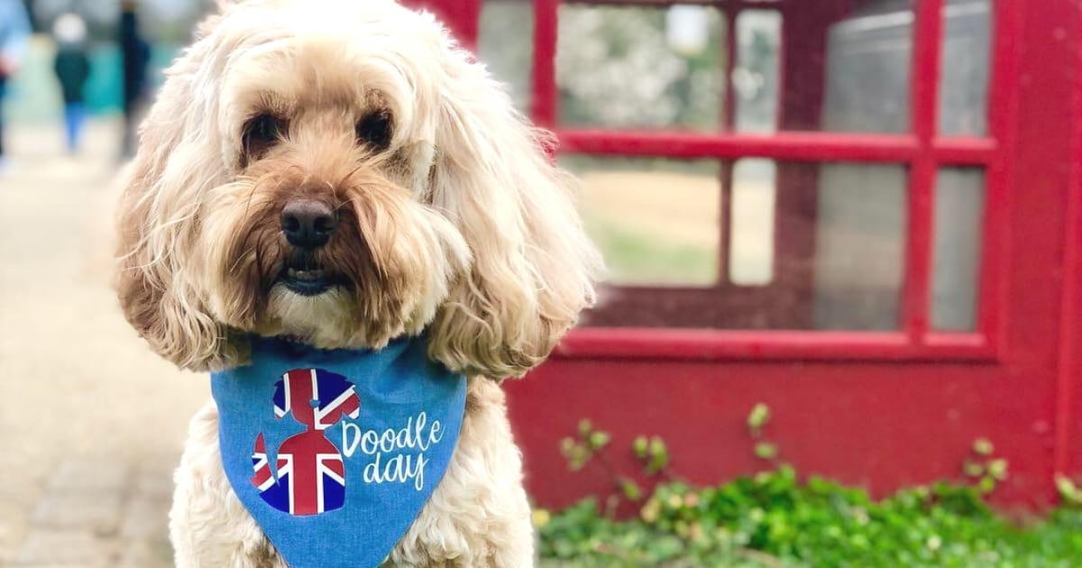 International Doodle Dog Day 2019 Event Cover Photo
