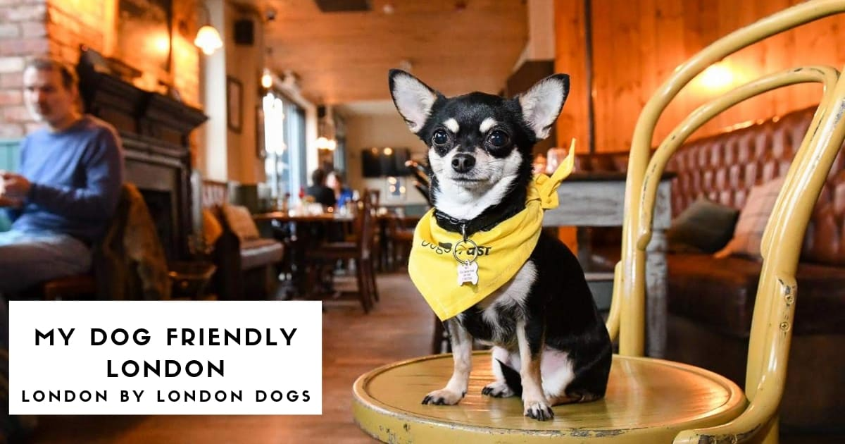 My Dog-Friendly London - London by London Dogs Features - Bella the Chi