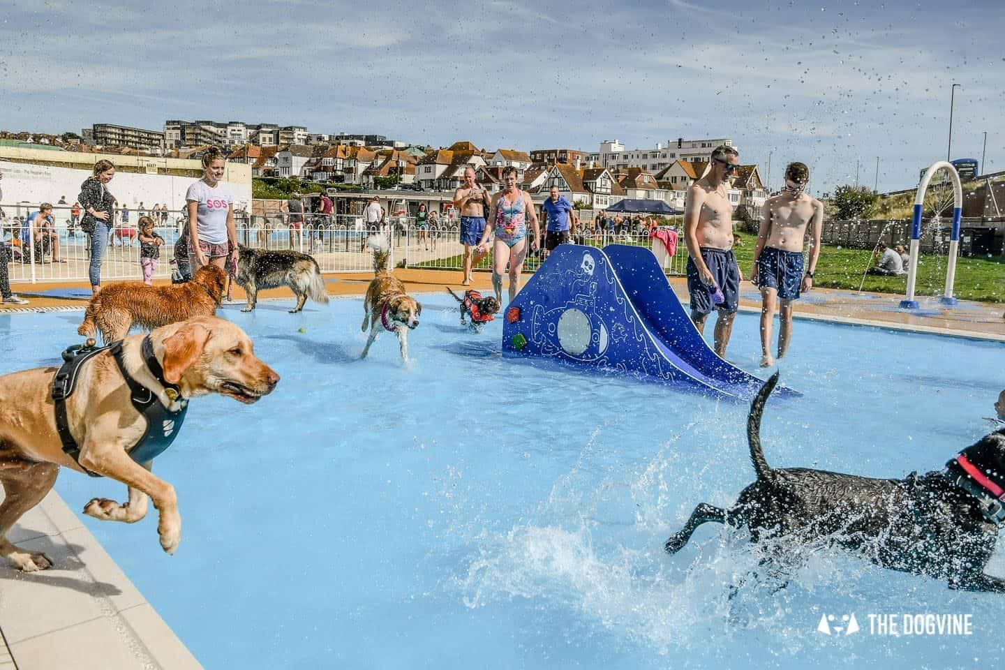 Saltdean Lido Dog Swim 2019 - Small Shallow Pool