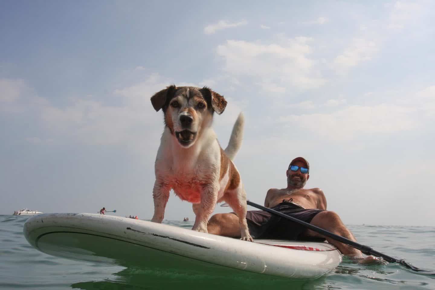 The Best Dog-friendly Festivals in London And Nearby - Paddle Round The Pier Dog