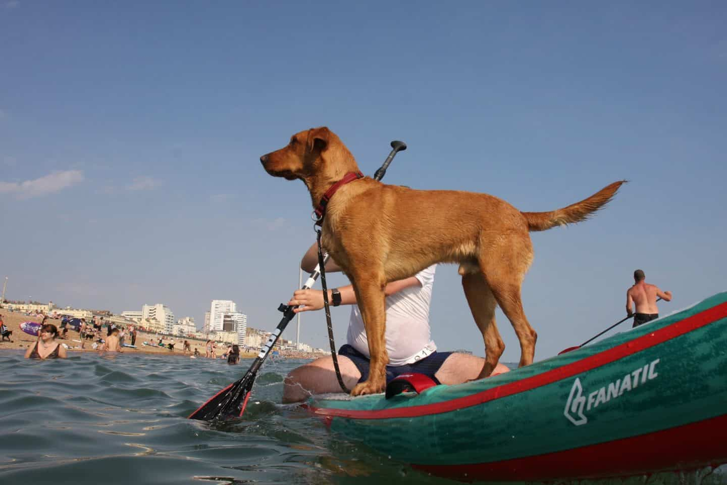 The Best Dog-friendly Festivals in London And Nearby - Paddle Round The Pier 2