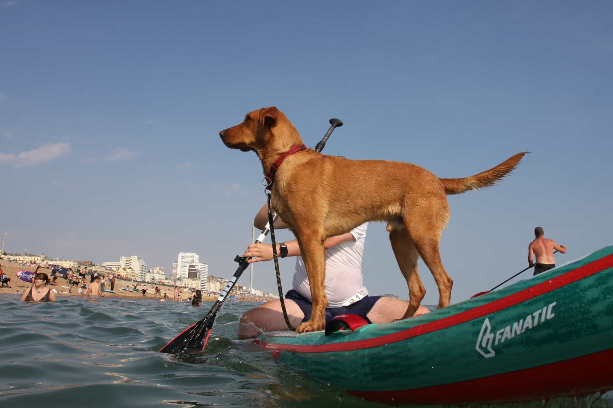 The Best Dog-friendly Festivals in London And Nearby - Paddle Around The Pier 2