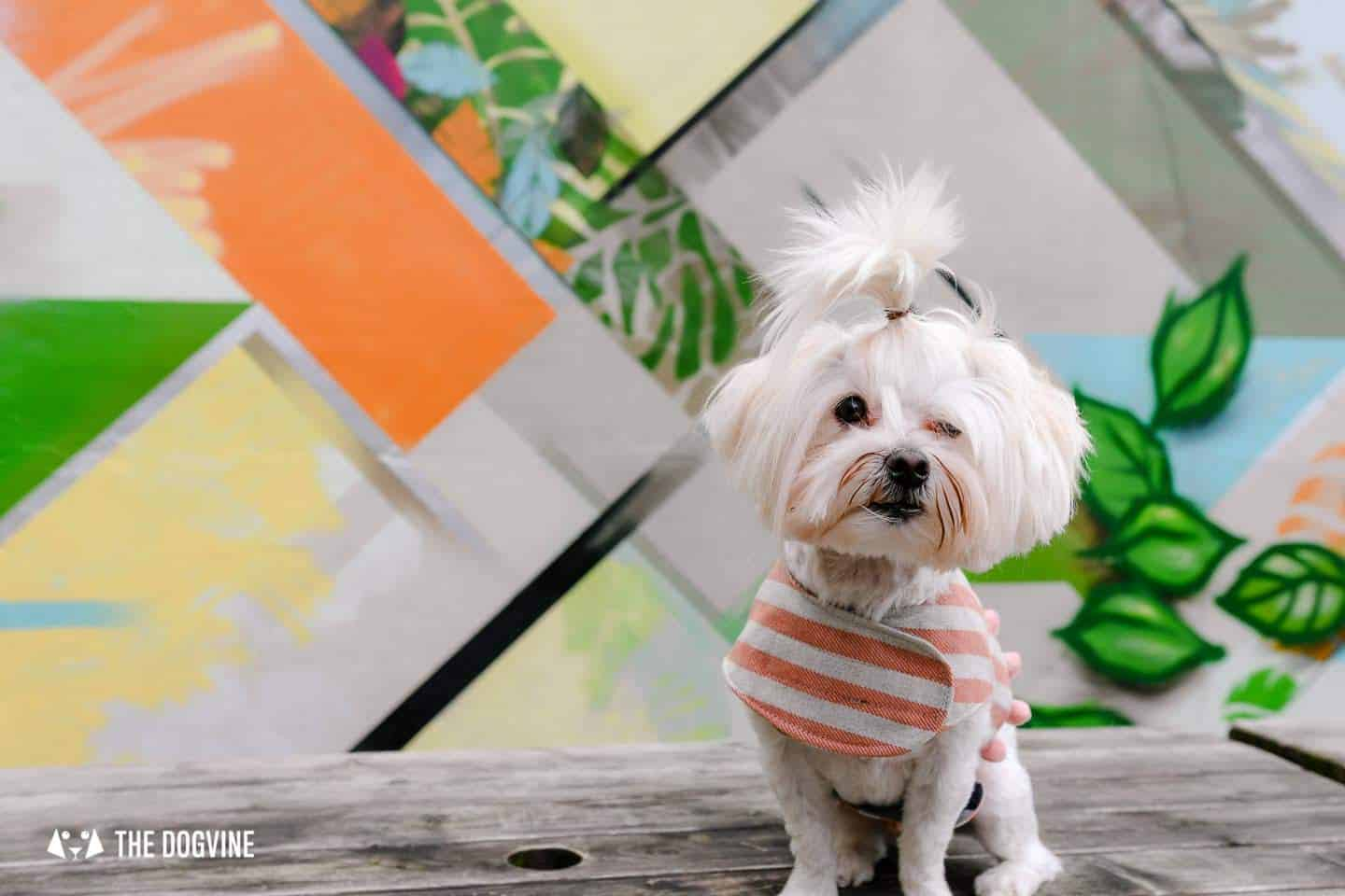 The Best of Dog-friendly St Johns by Milo the Maltese 1