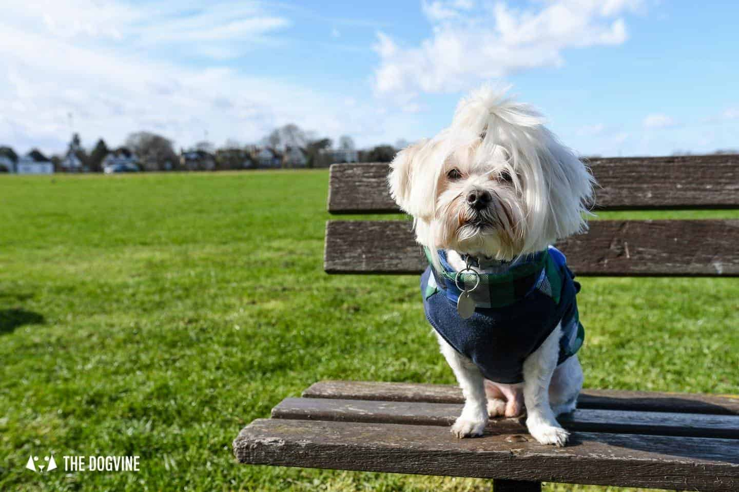 The Best of Dog-friendly St Johns by Milo the Maltese - Blackheath Common