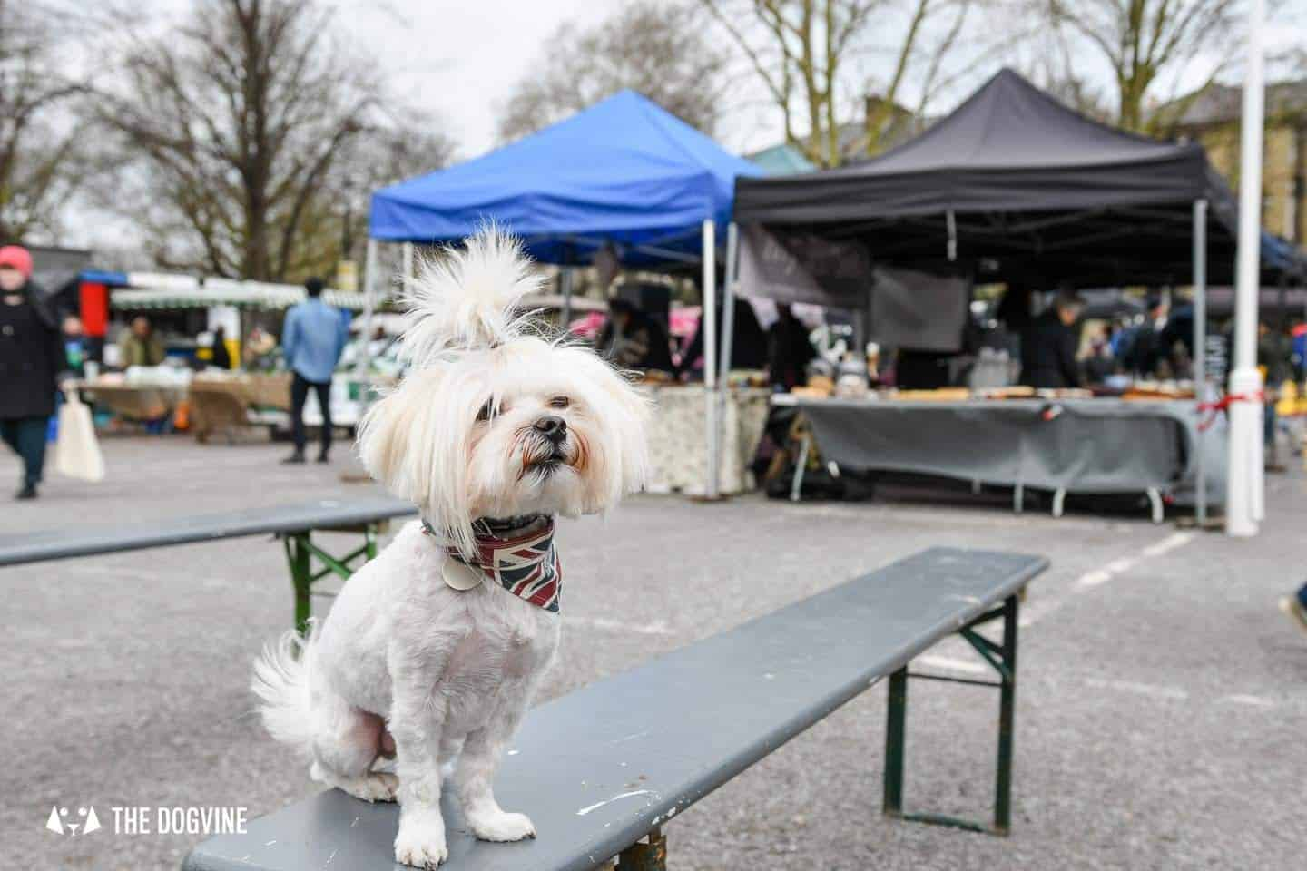 The Best of Dog-friendly St Johns by Milo the Maltese - Brockley Market 1