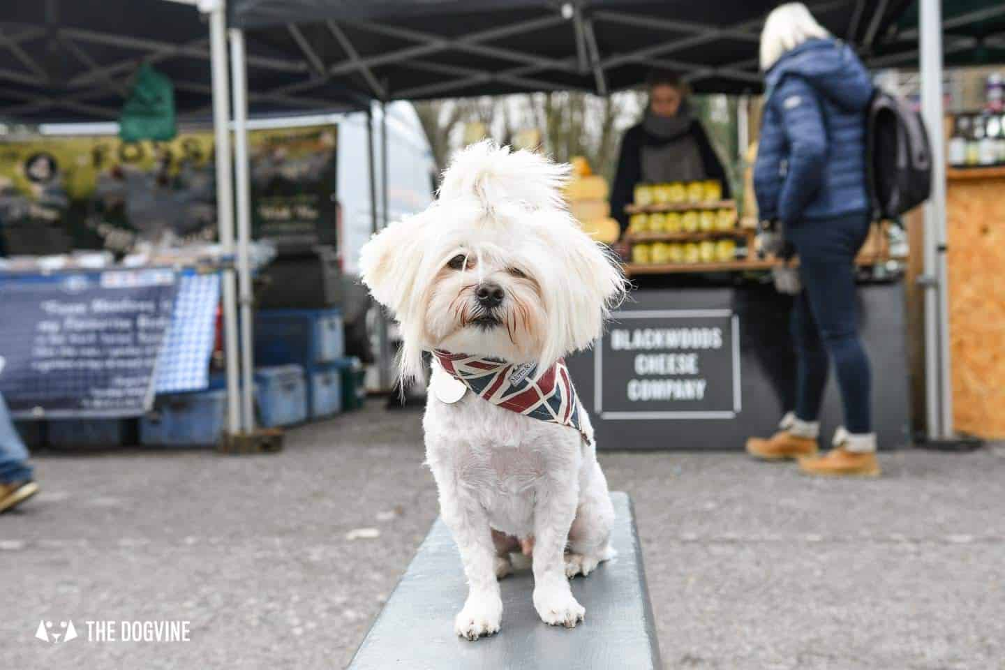 The Best of Dog-friendly St Johns by Milo the Maltese - Brockley Market 2