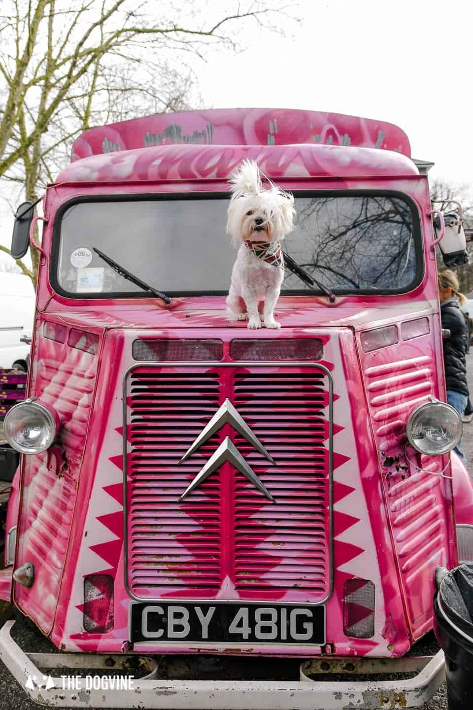The Best of Dog-friendly St Johns by Milo the Maltese - Brockley Market food Truck