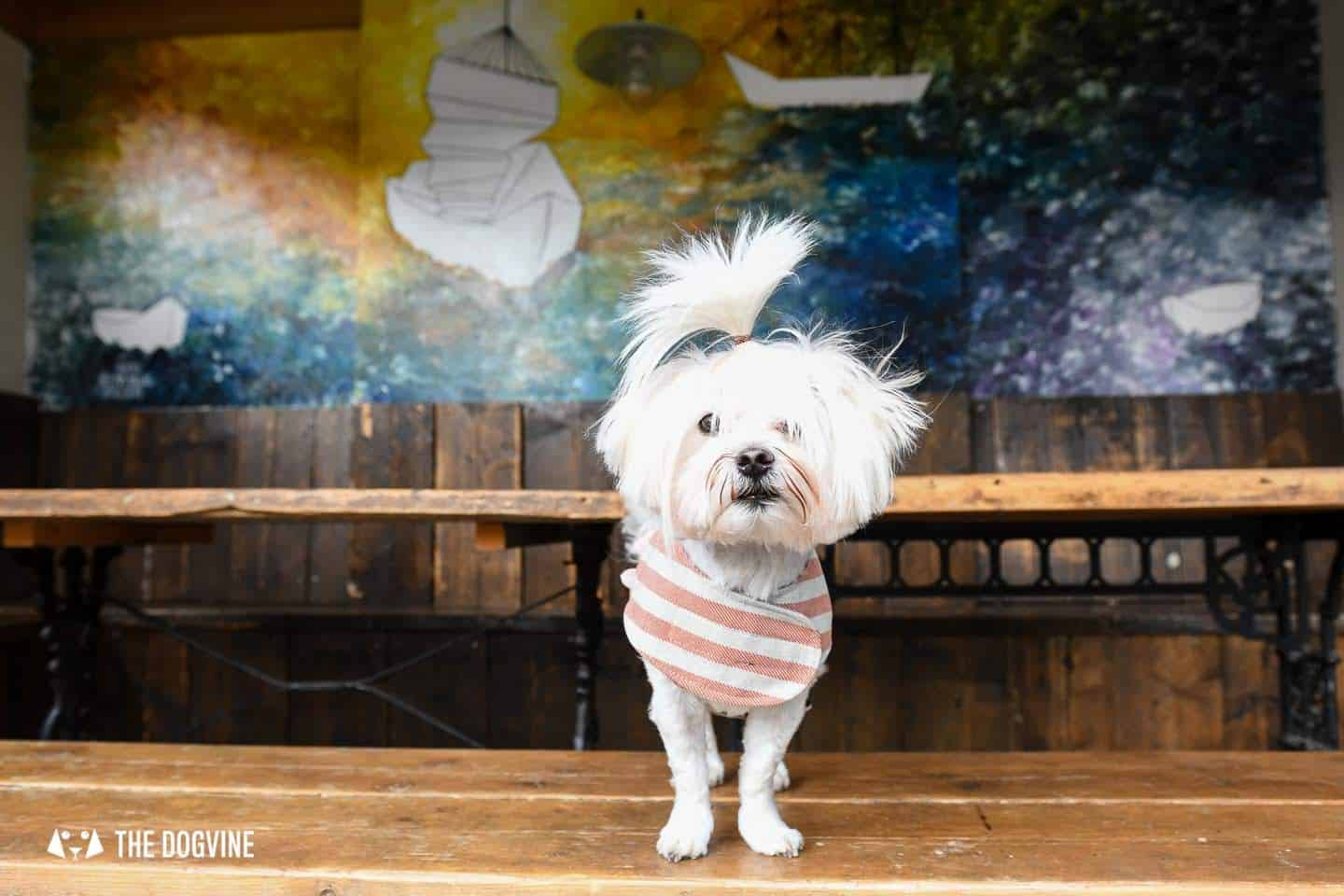 The Best of Dog-friendly St Johns by Milo the Maltese - Dog-friendly London