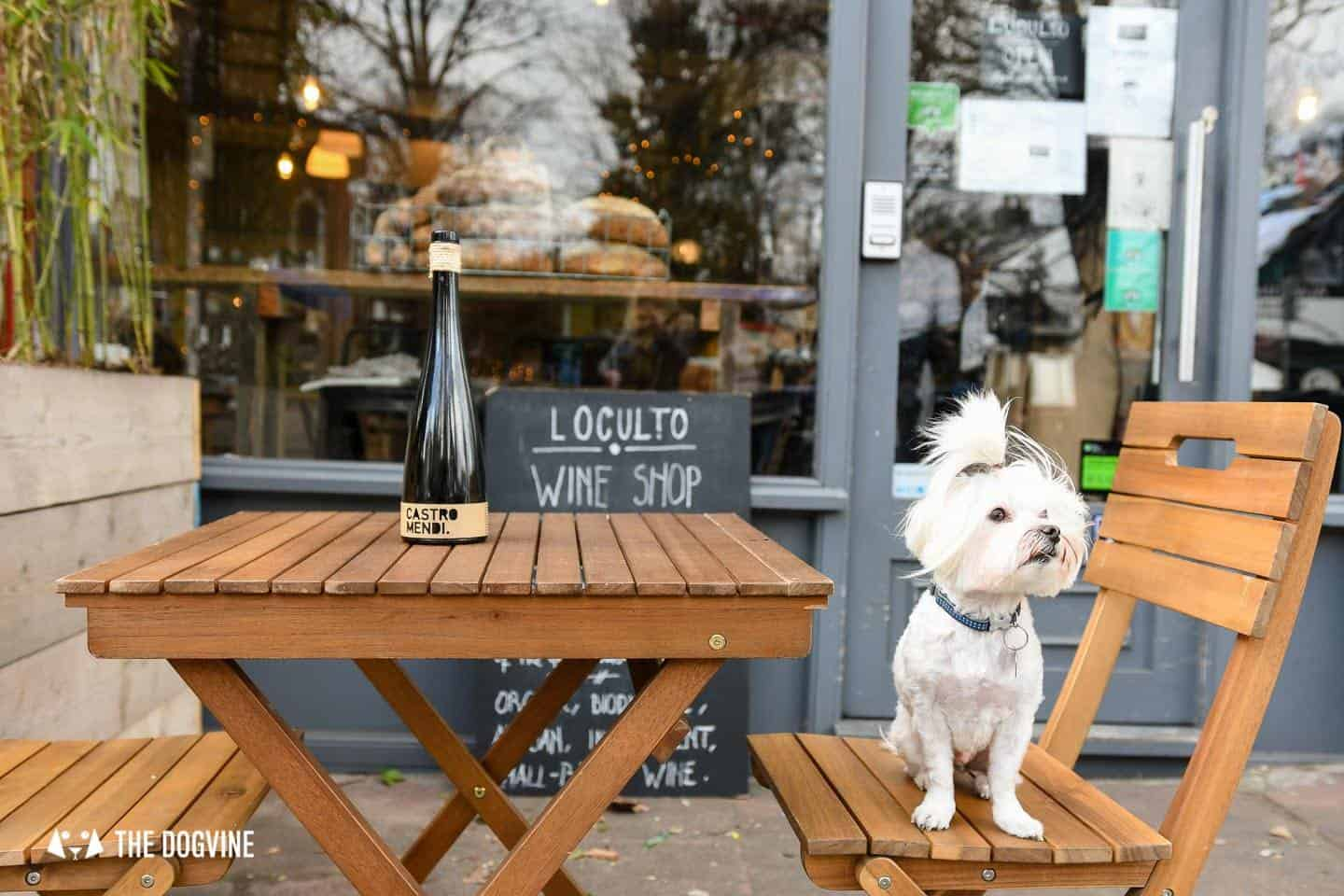 The Best of Dog-friendly St Johns by Milo the Maltese - L'Oculto 1