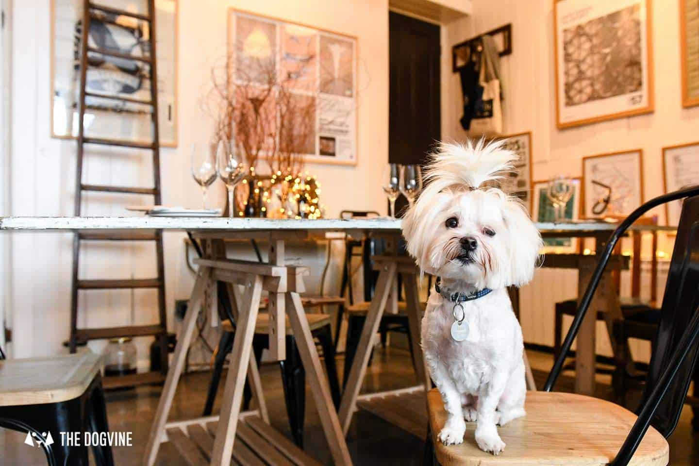 The Best of Dog-friendly St Johns by Milo the Maltese - L'Oculto 2