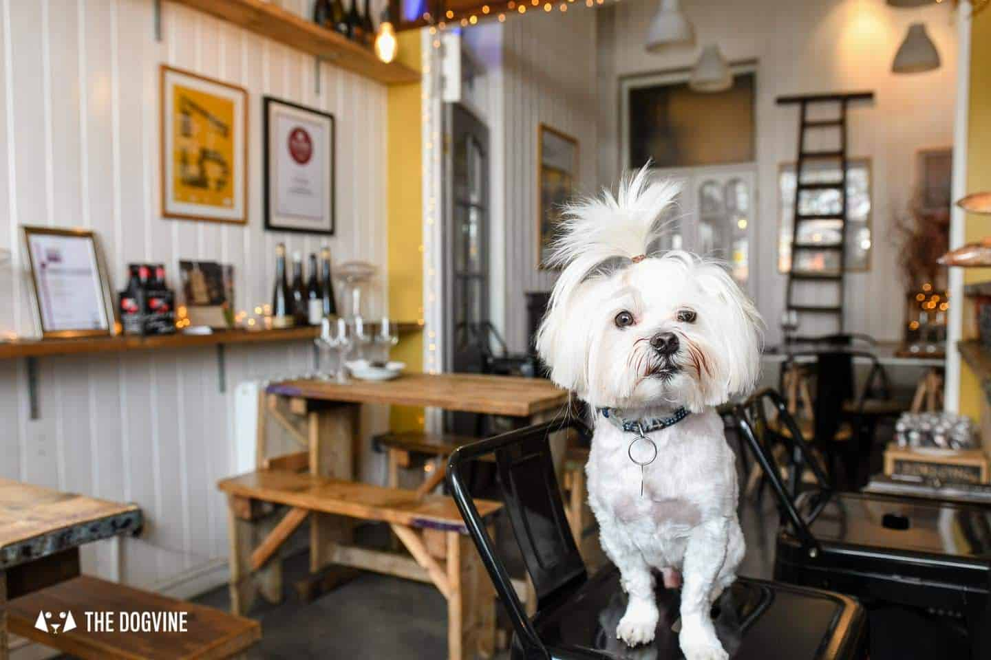 The Best of Dog-friendly St Johns by Milo the Maltese - L'Oculto 3
