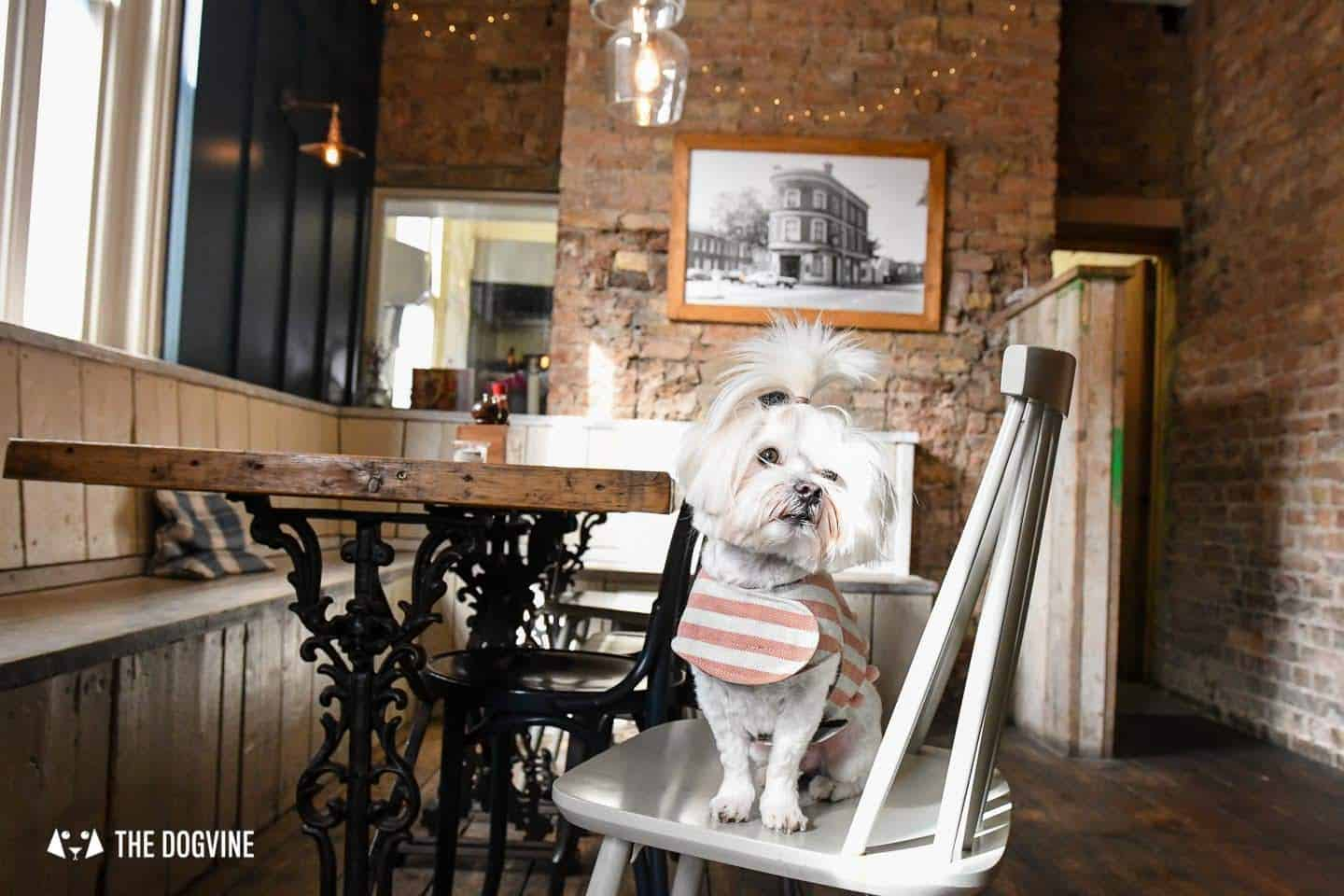 The Best of Dog-friendly St Johns by Milo the Maltese - The Brookmill 1