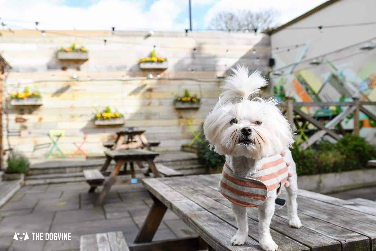The Best of Dog-friendly St Johns by Milo the Maltese - The Brookmill 2