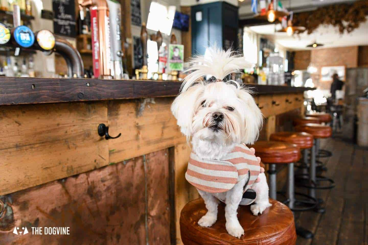 The Best of Dog-friendly St Johns by Milo the Maltese - The Brookmill 3