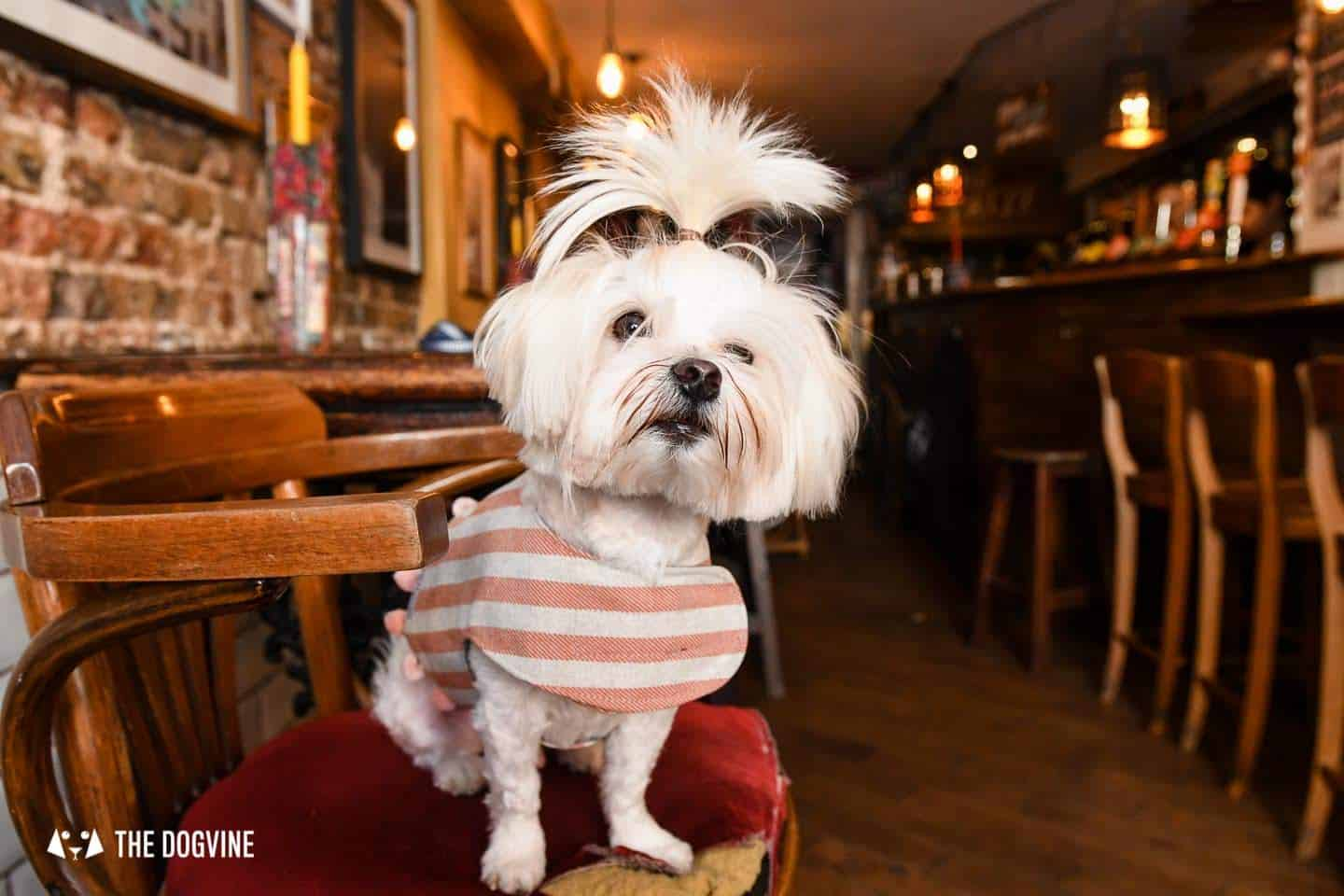 The Best of Dog-friendly St Johns by Milo the Maltese - The Full Nelson 1