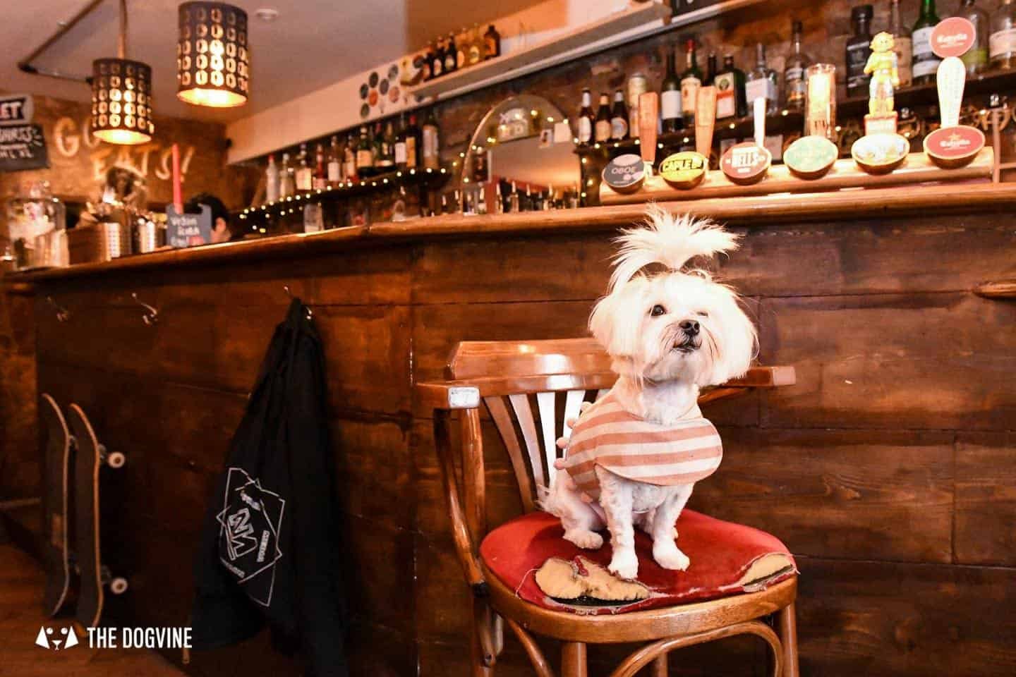 The Best of Dog-friendly St Johns by Milo the Maltese - The Full Nelson 2