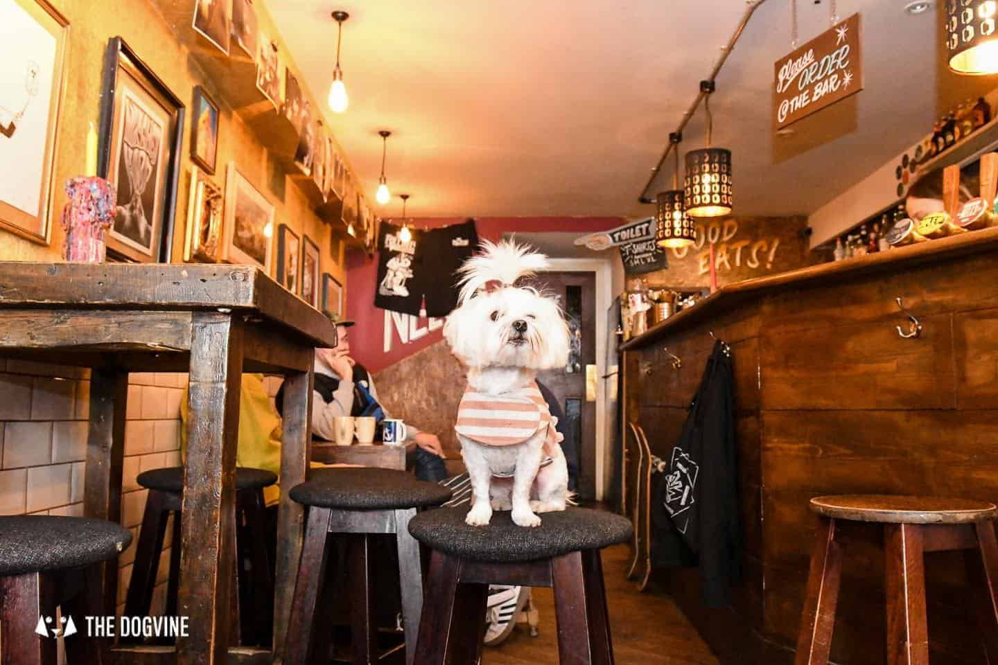 The Best of Dog-friendly St Johns by Milo the Maltese - The Full Nelson 3