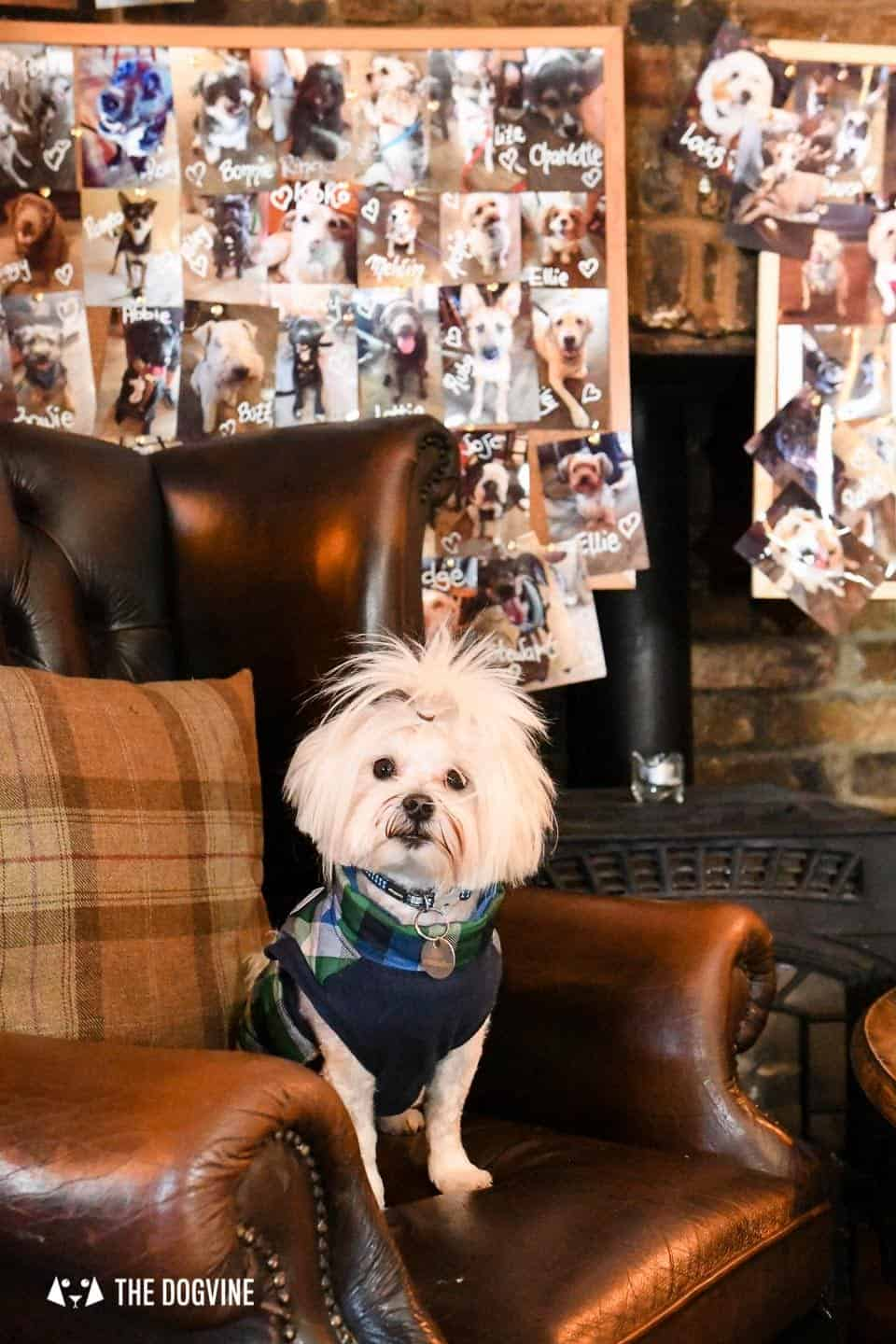 The Best of Dog-friendly St Johns by Milo the Maltese - The Hare & Billet 1