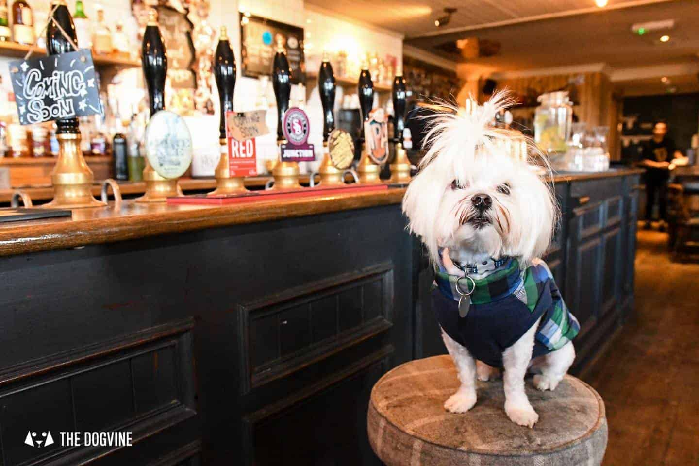 The Best of Dog-friendly St Johns by Milo the Maltese - The Hare & Billet 2