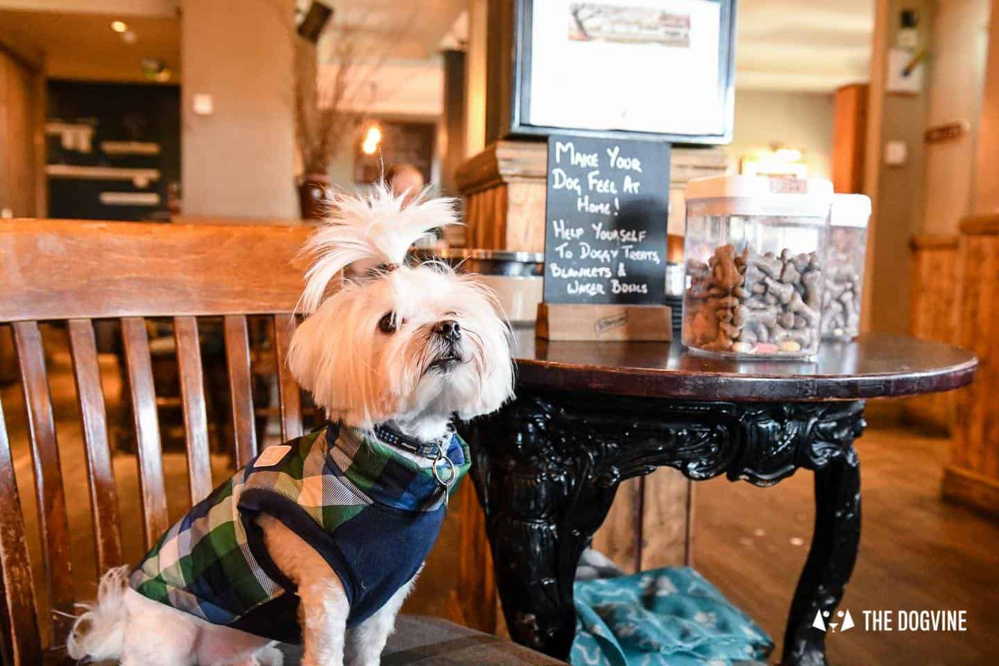 The Best of Dog-friendly St Johns by Milo the Maltese - The Hare & Billet 3