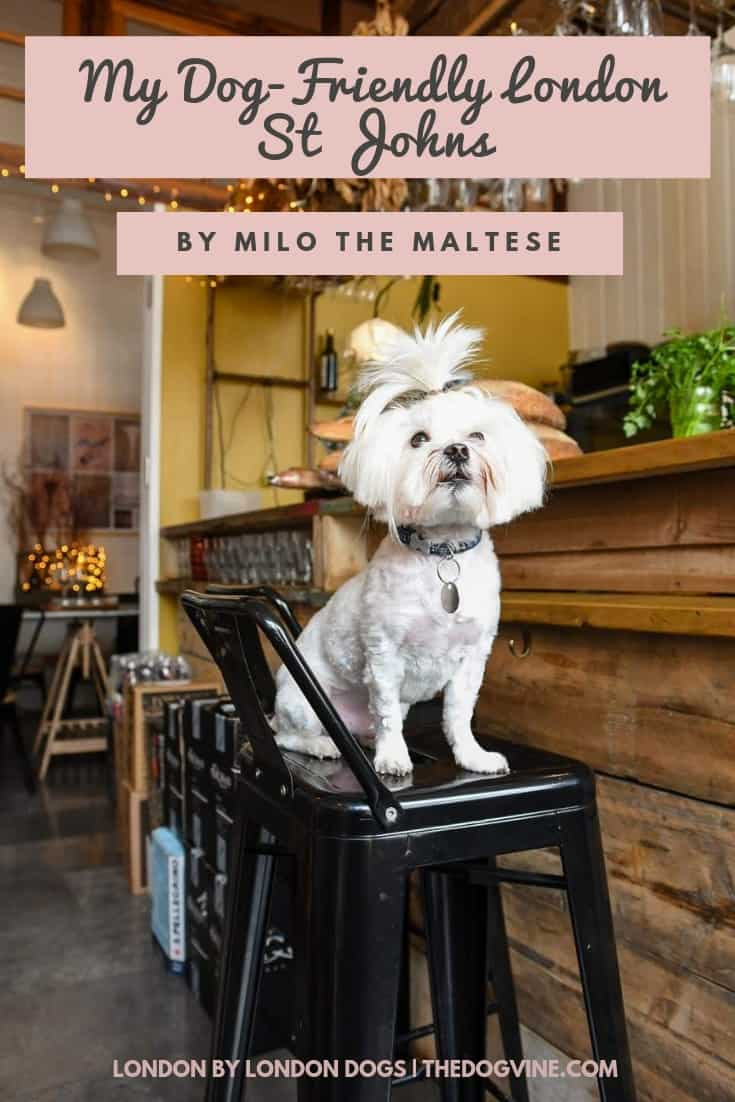The Best of Dog-friendly St Johns by Milo the Maltese _ Guide By Milo the Maltese