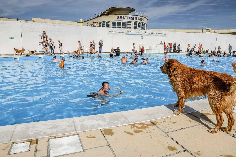 Dog poolside at Saltdean Lido
