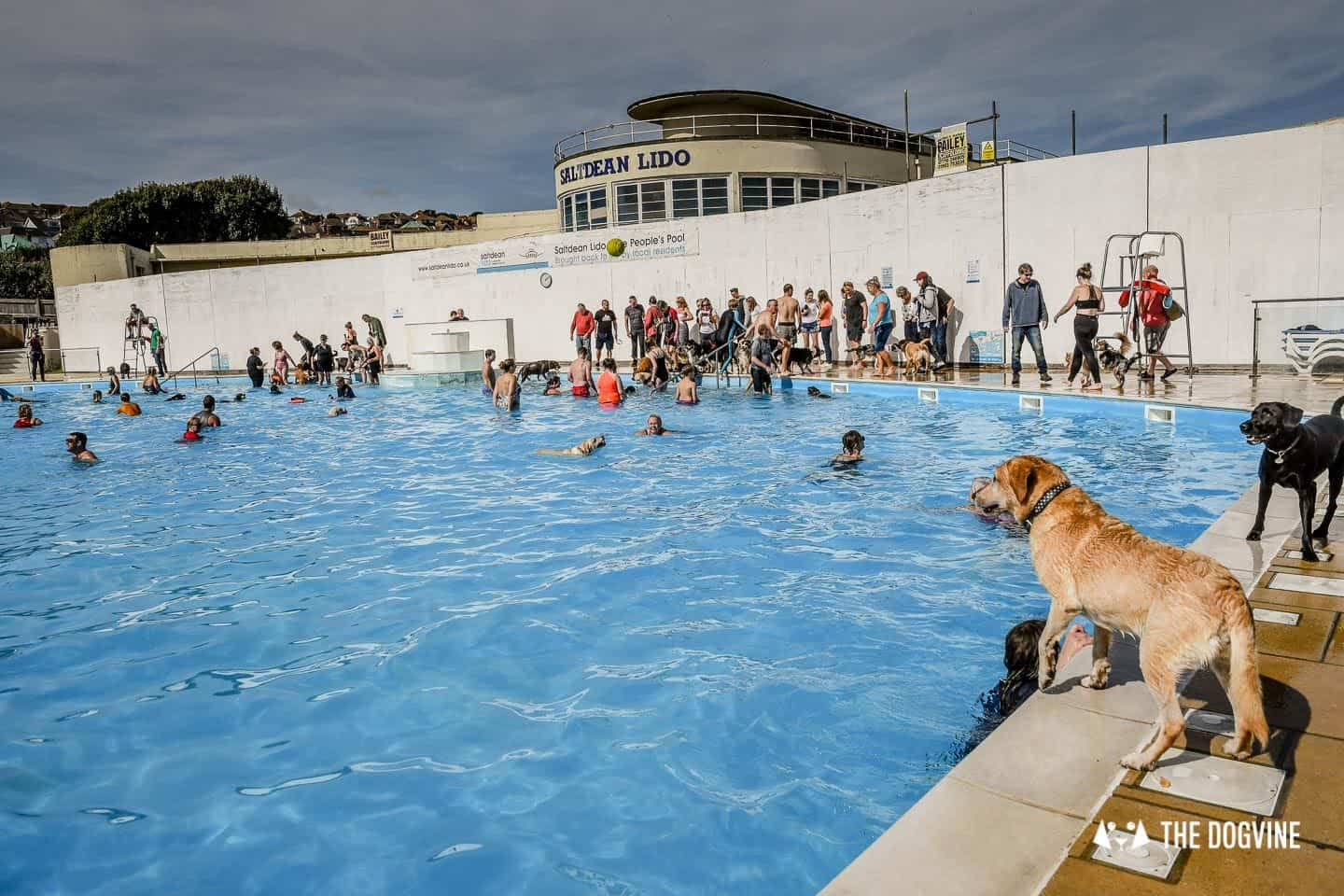 The Saltdean Lido Dog Swim 2019 - Dogs at the pool
