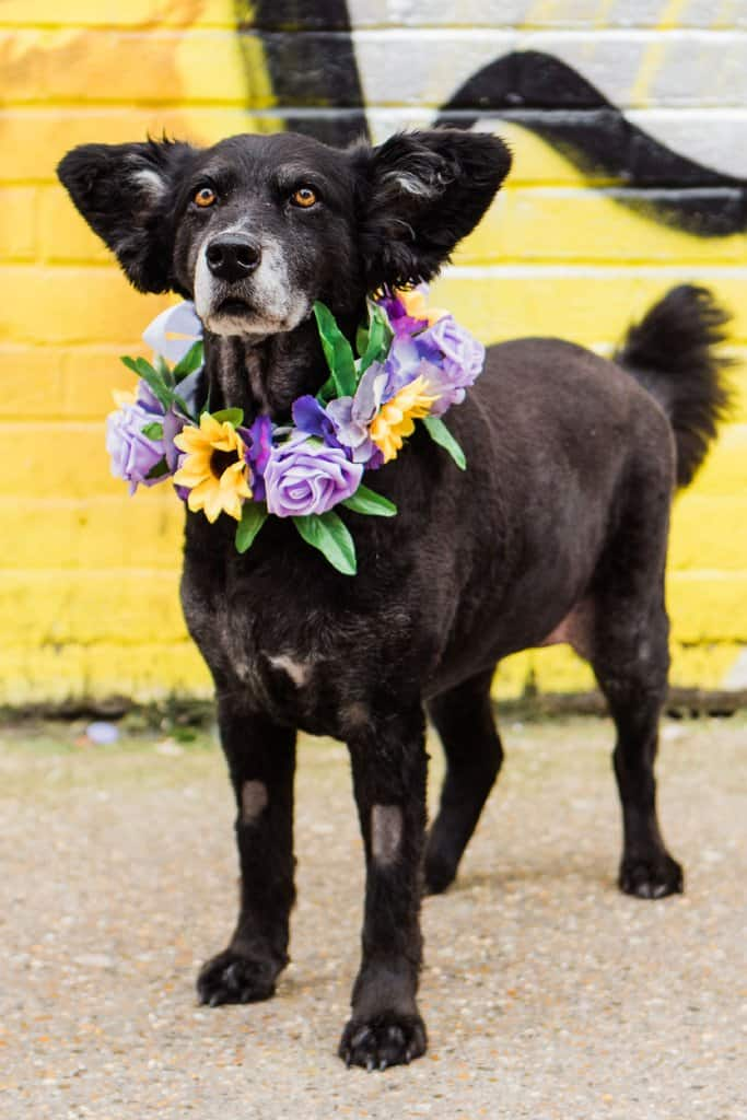 What to Take to a Dog Festival Checklist - Cupid Collars - Photo by Parrot and Pineapple