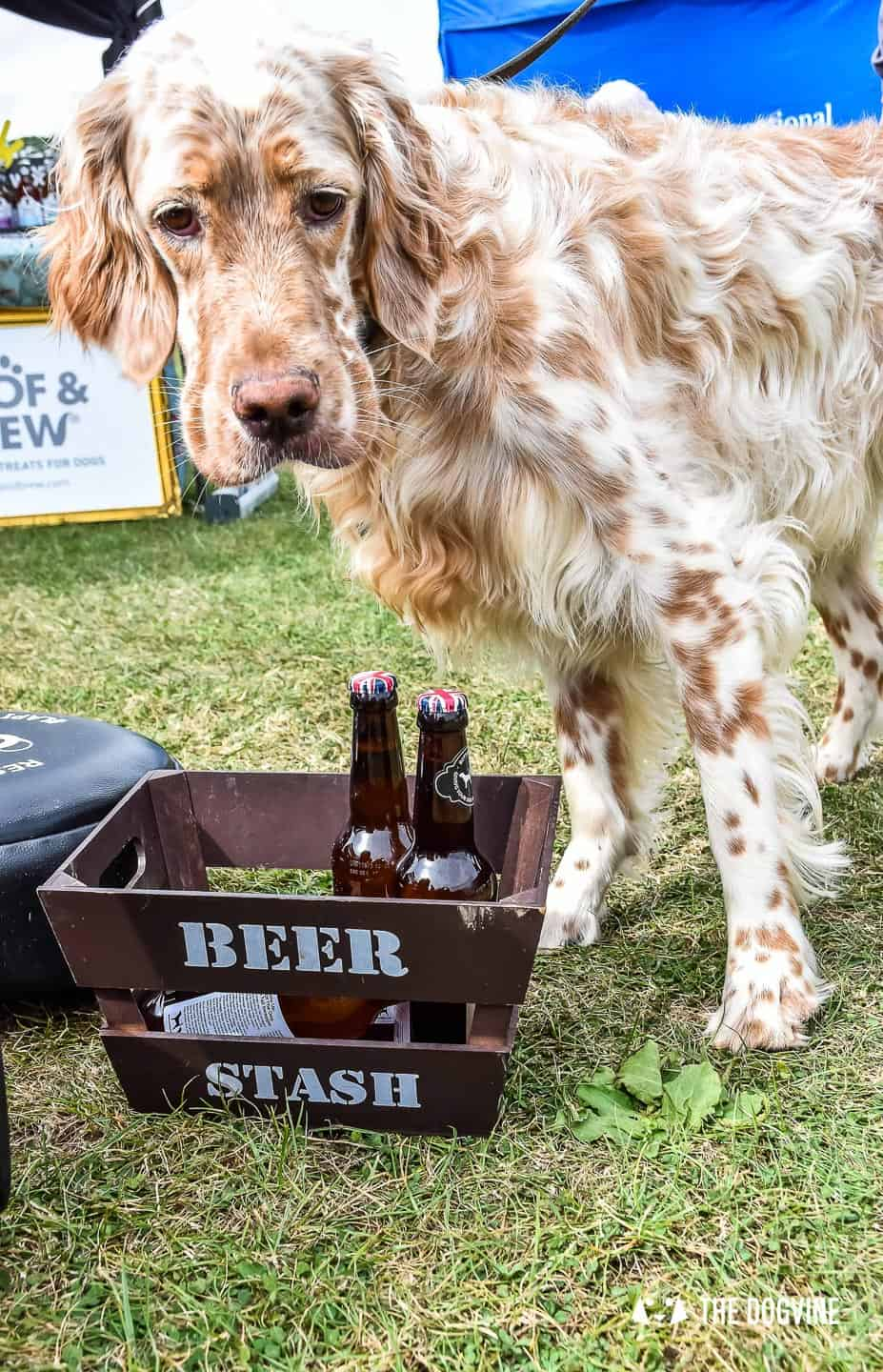 What to Take to a Dog Festival Checklist - Dog Drinking Beer