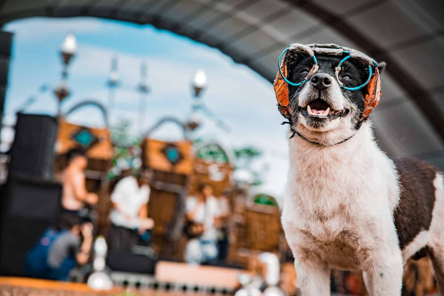 What to Take to a Dog Festival Checklist - Dog at Festvival