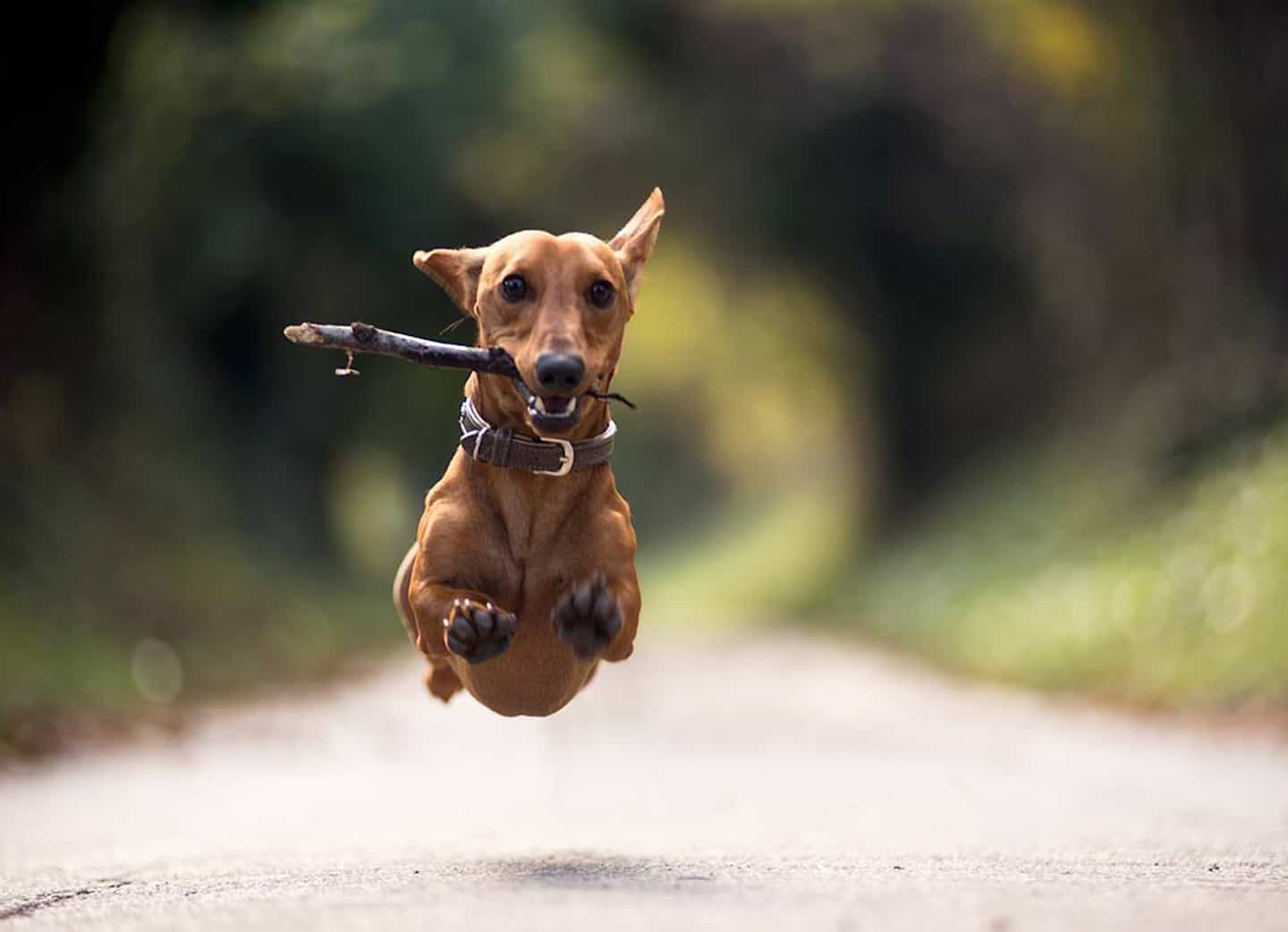 Dog flying through the air having the best time!