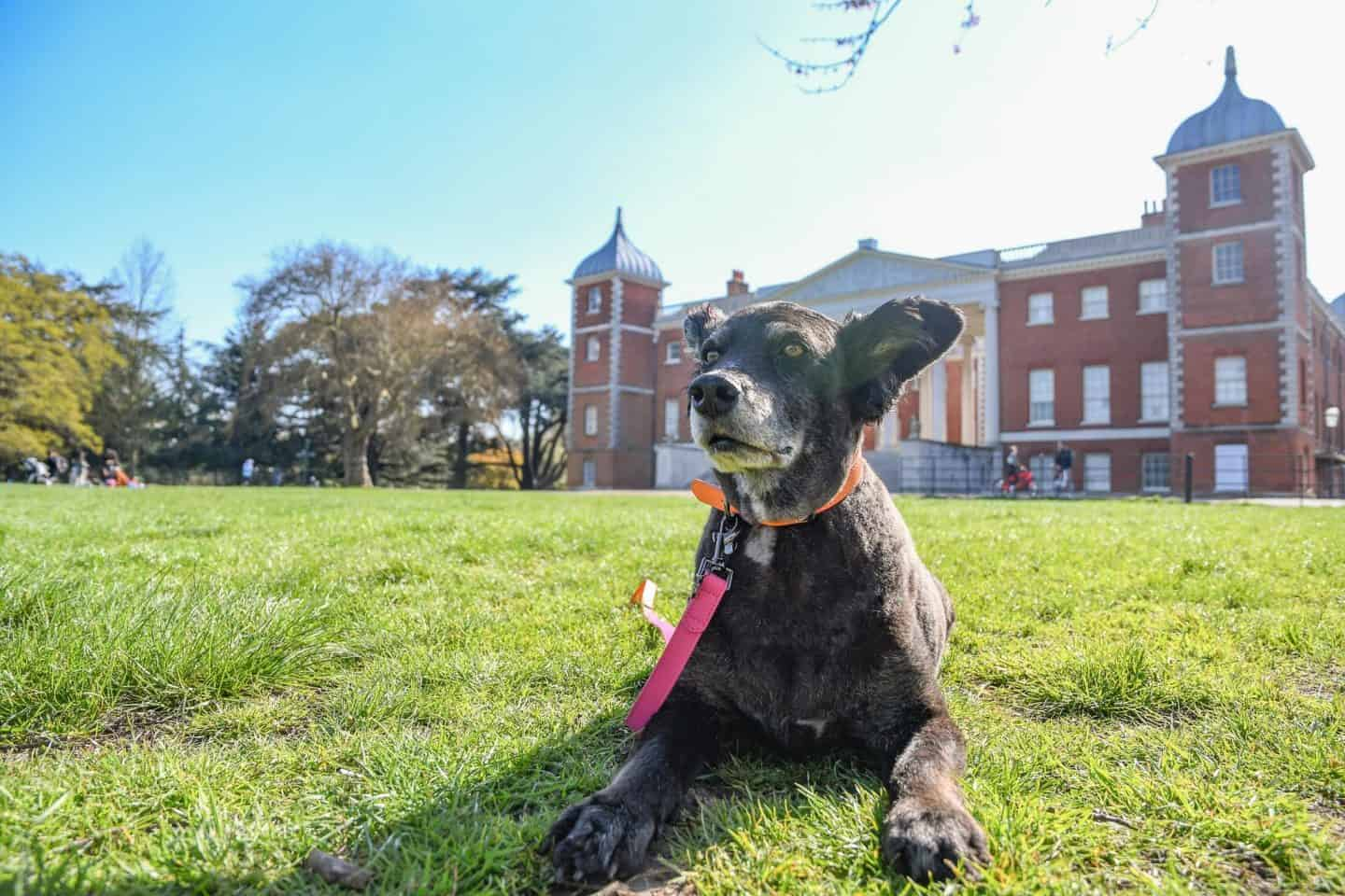 Dog-Friendly Osterley Park and House | A Dog's Day Out